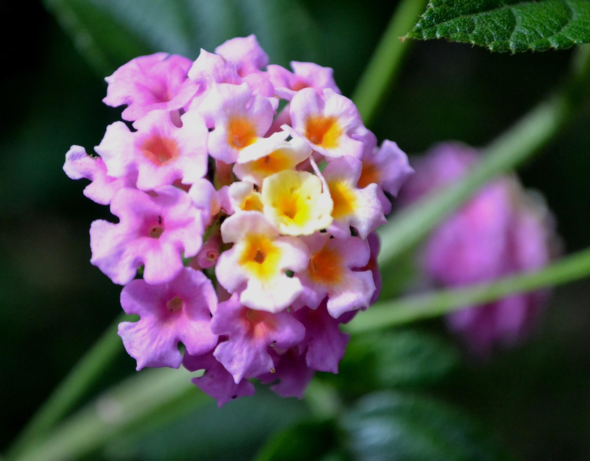 Flowers 30 by ABHAJAIN