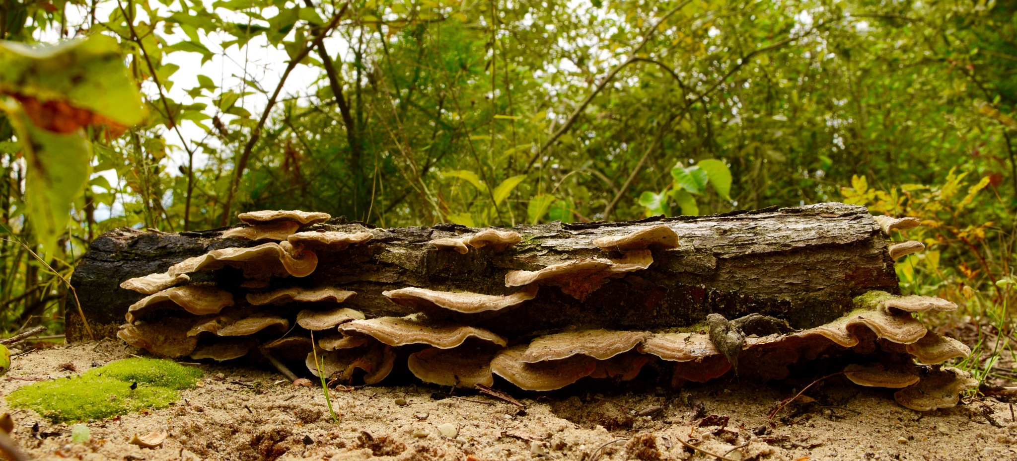 Log covered with fungus by John  Lepisto