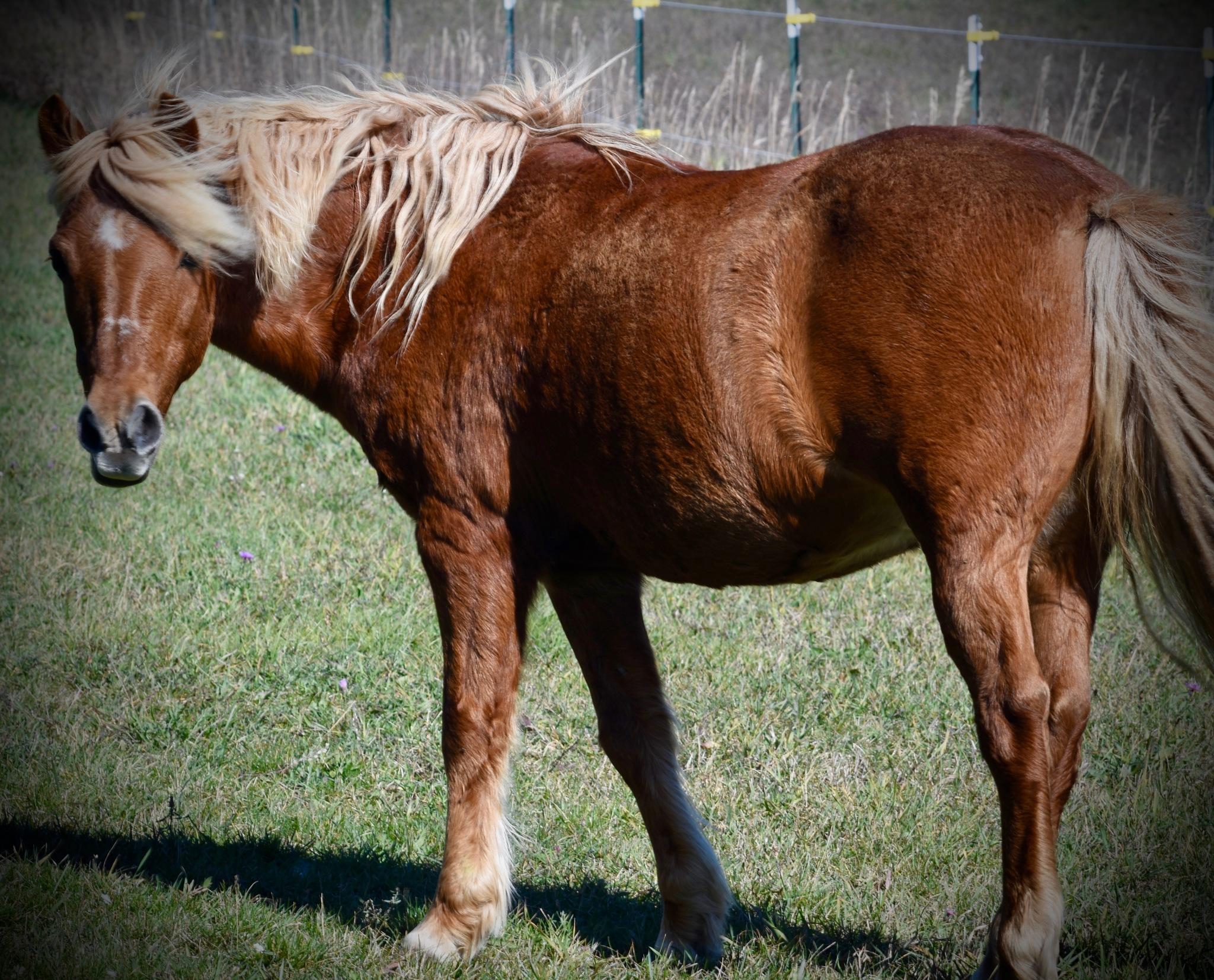 Horse in the Vineyard by John  Lepisto