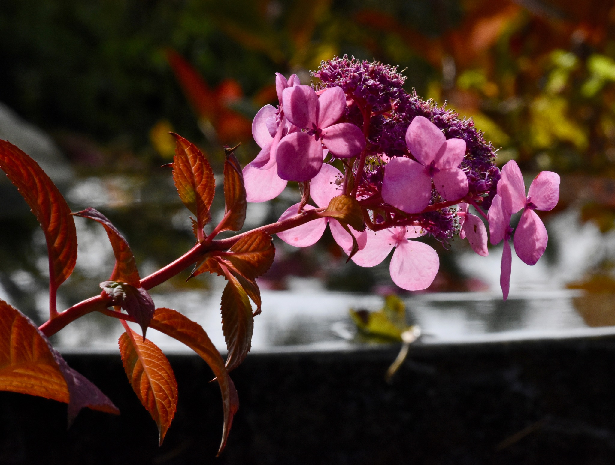 Flowers and basin by John  Lepisto