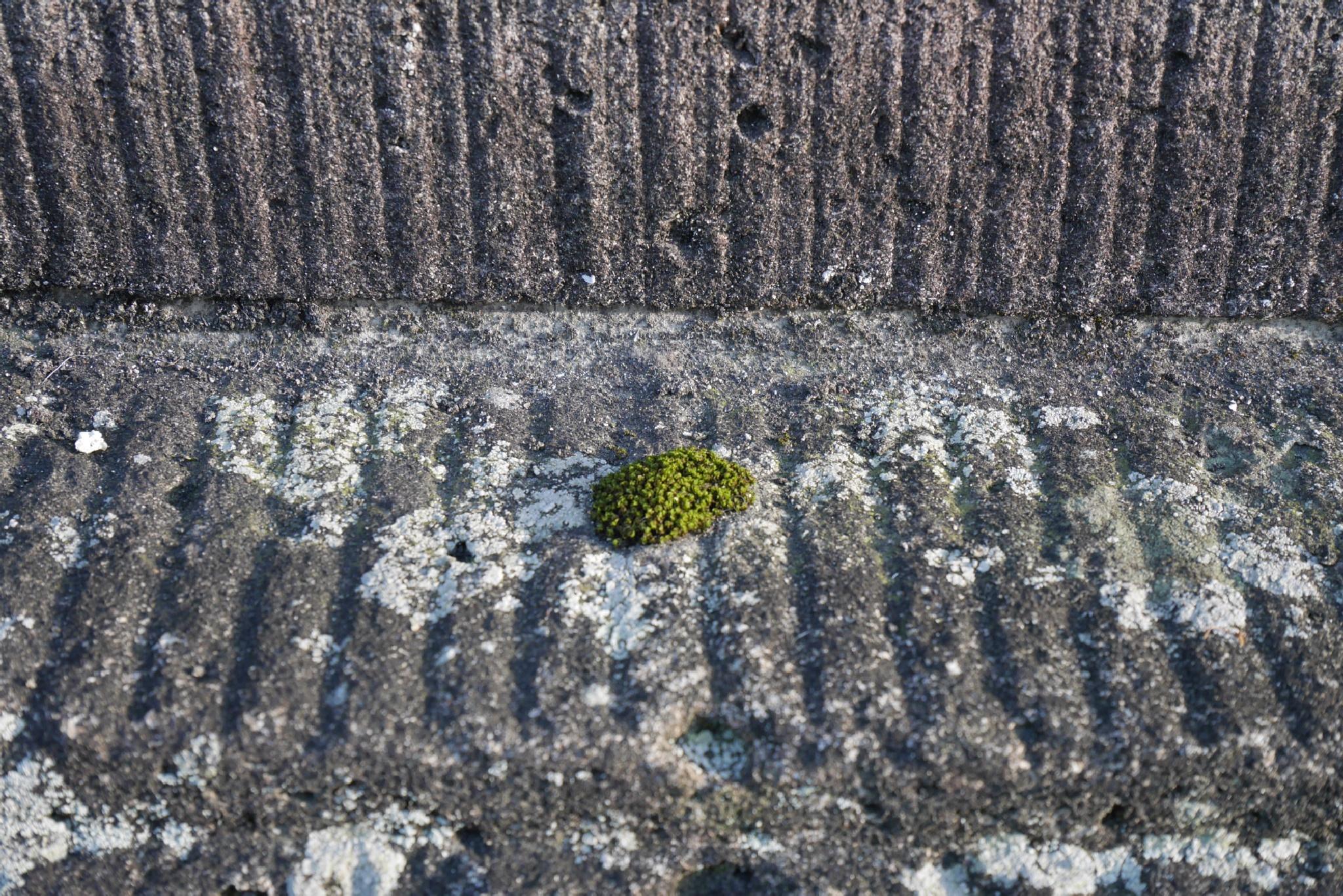 Cute moss by HAJIME KAMEZAKI