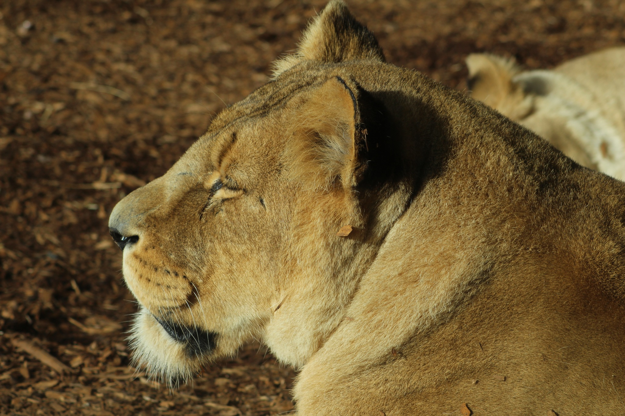Let sleeping lions lie by RichardWynne