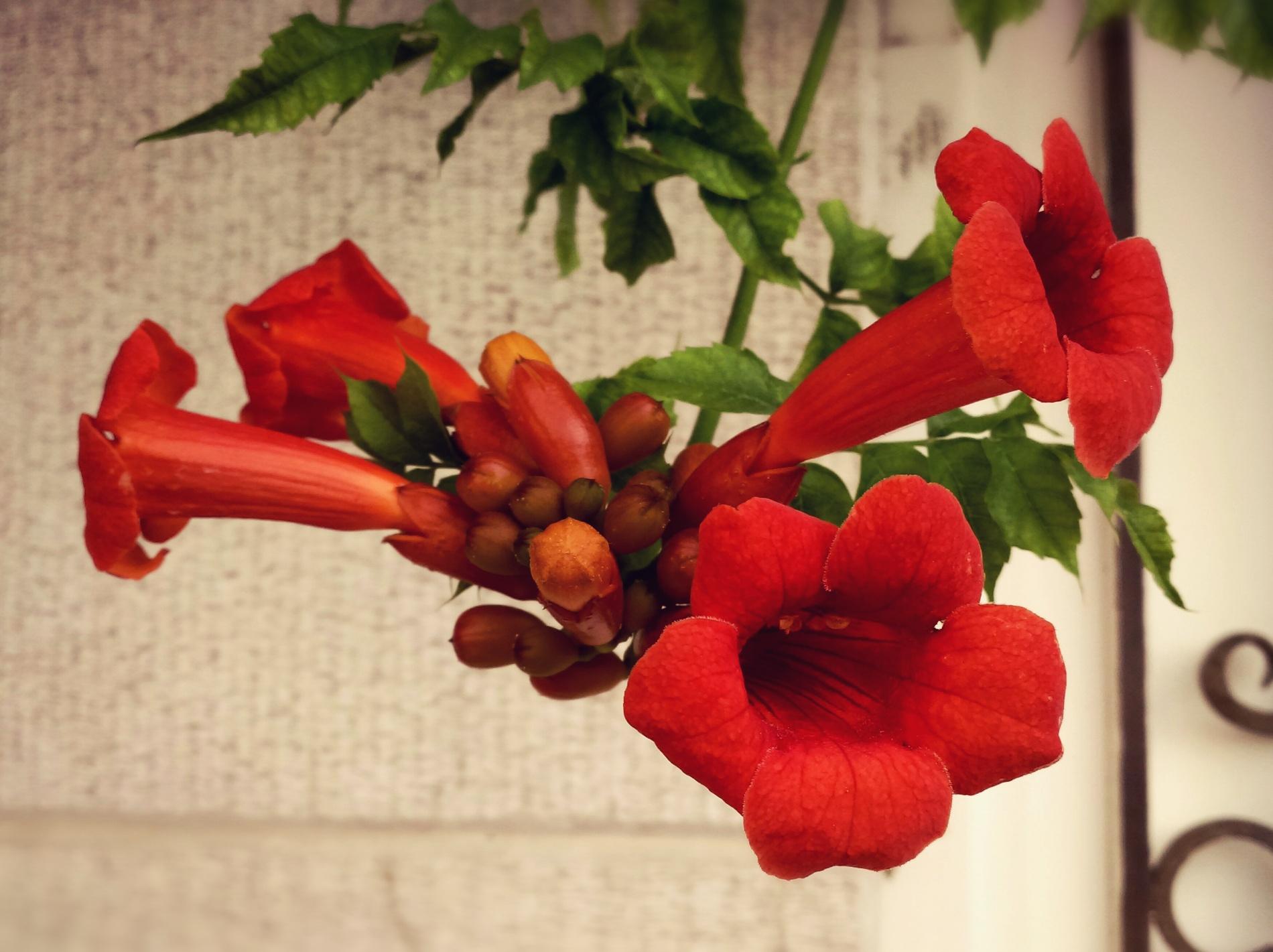 flower  by Sarah Khodabandeh