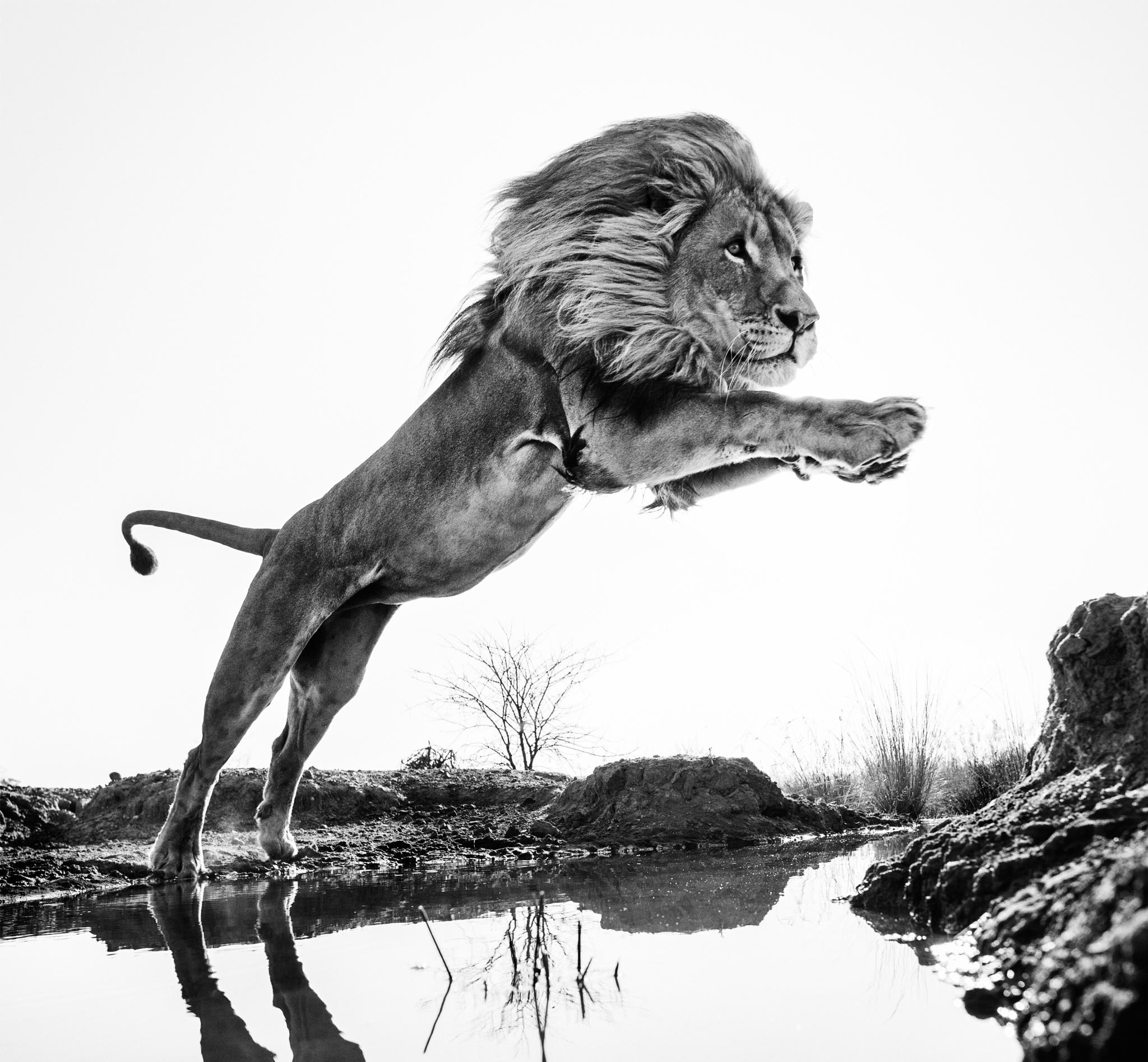 Lion King by davidyarrow