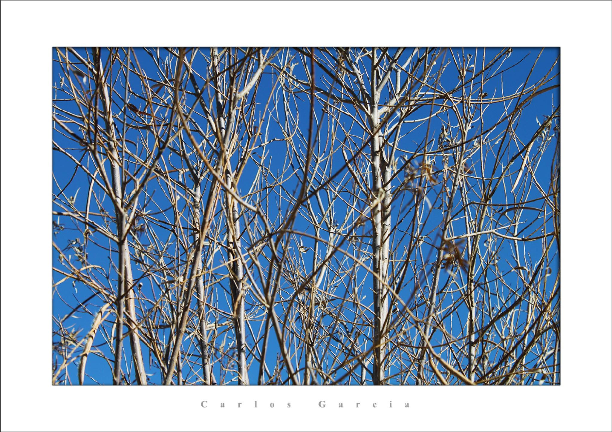 Albuquerque - Novo México - EUA / Albuquerque - New Mexico - USA by Carlos Alberto Garcia Neto