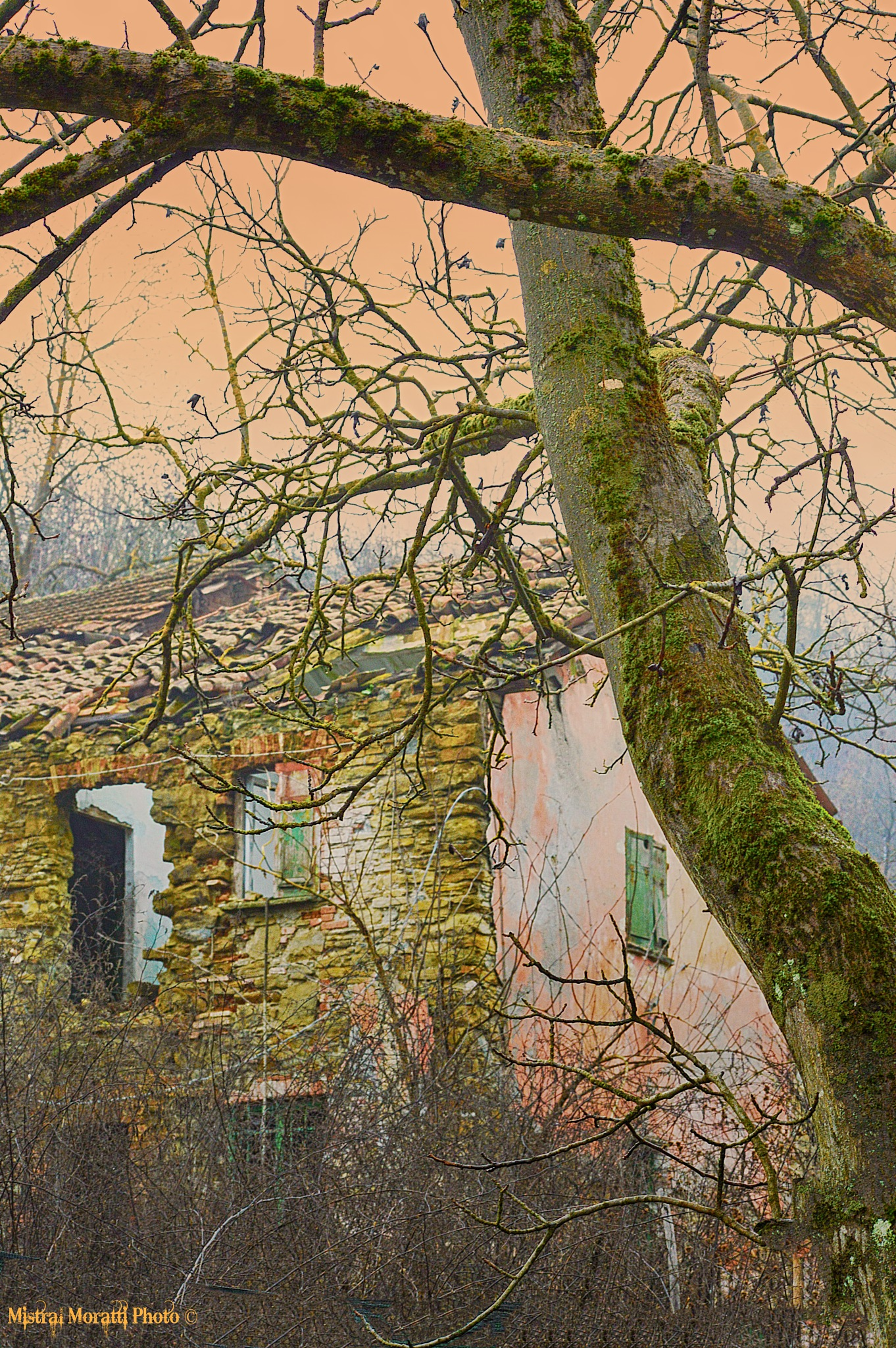 the witch's house by Mistral Moratti