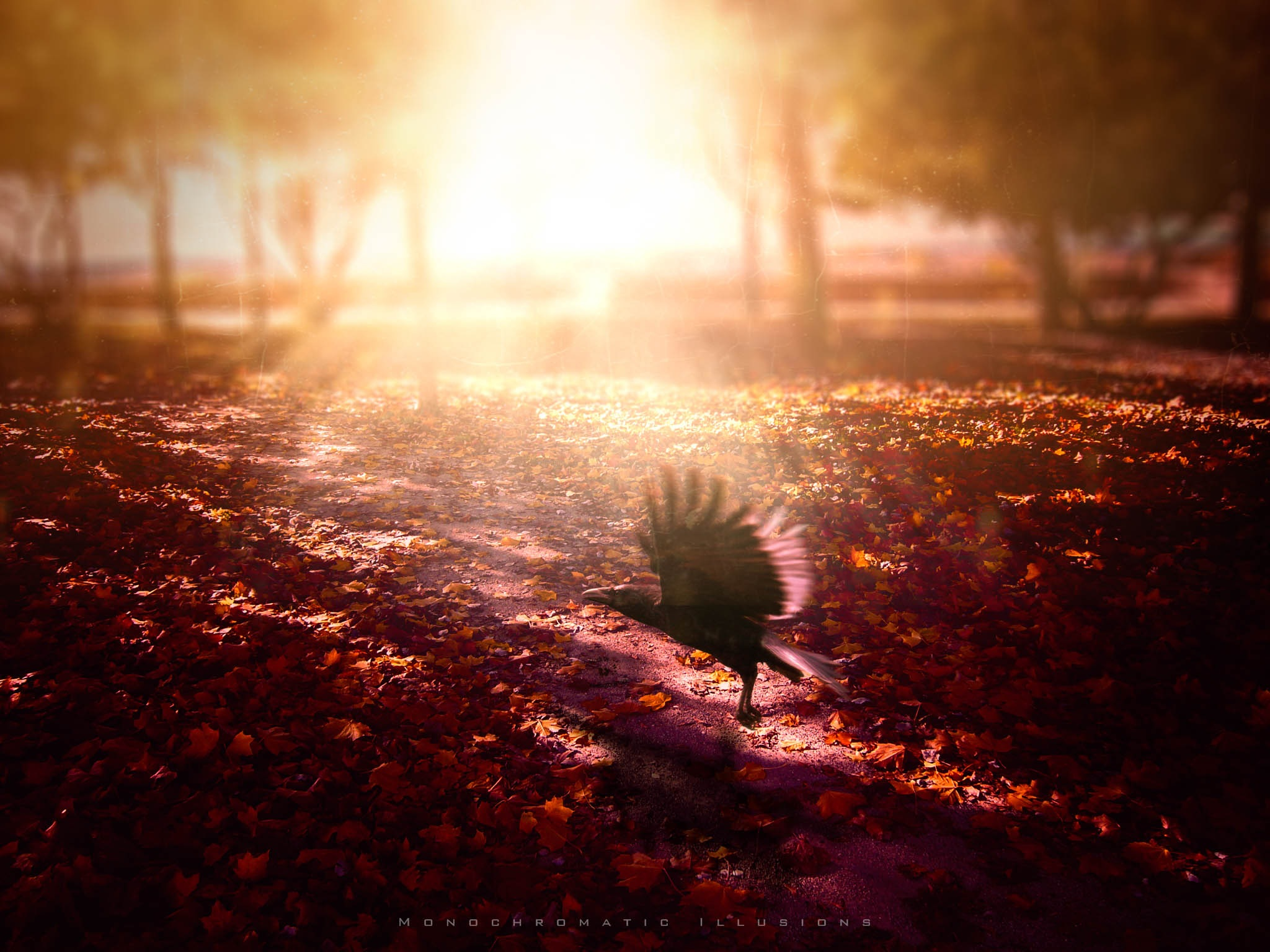 """Forever Autumn"" by JuanBlancoPhotography"