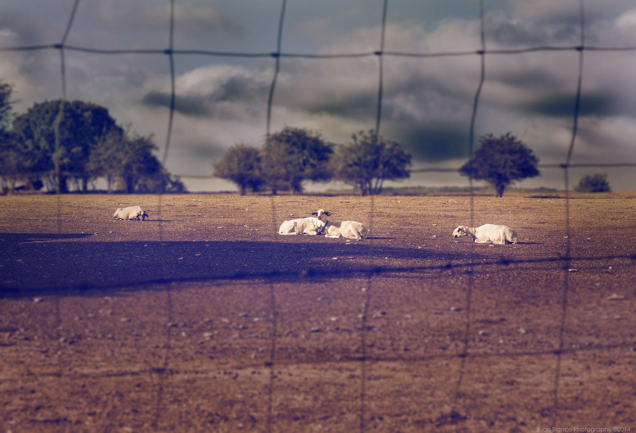 """Descansando"" by JuanBlancoPhotography"