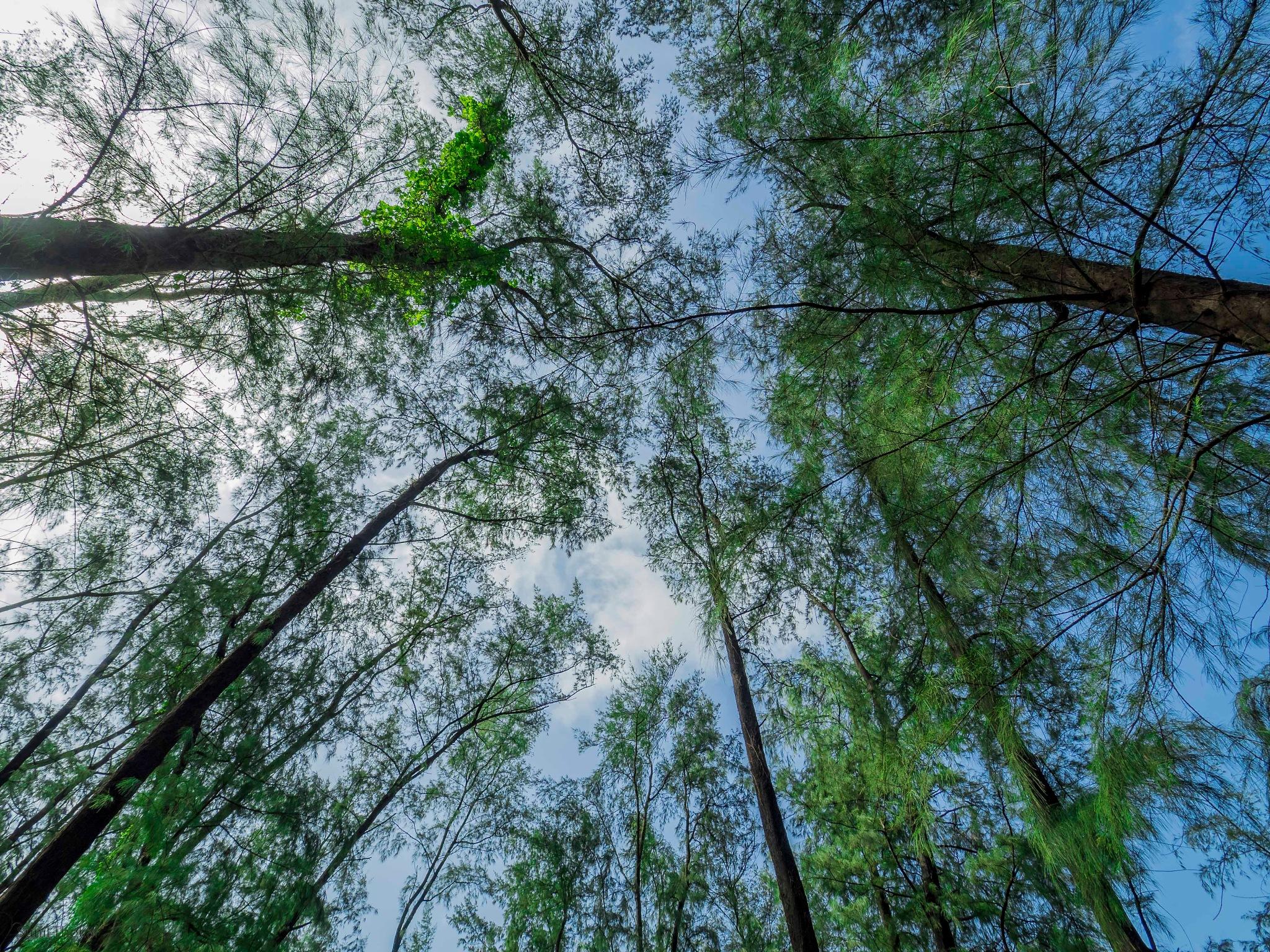 Trees by Sunil Prabhakar Thokal