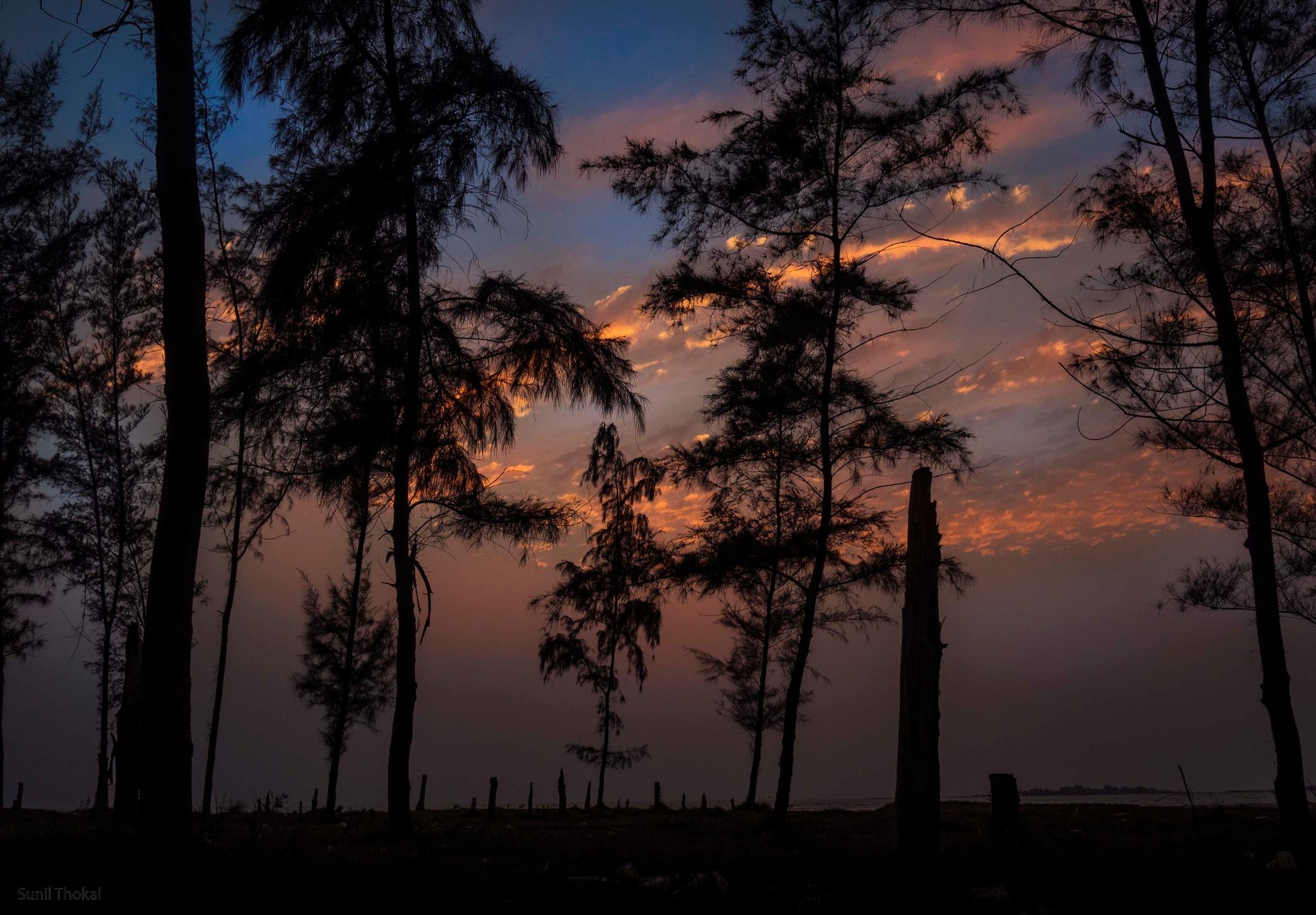 Evening by Sunil Prabhakar Thokal