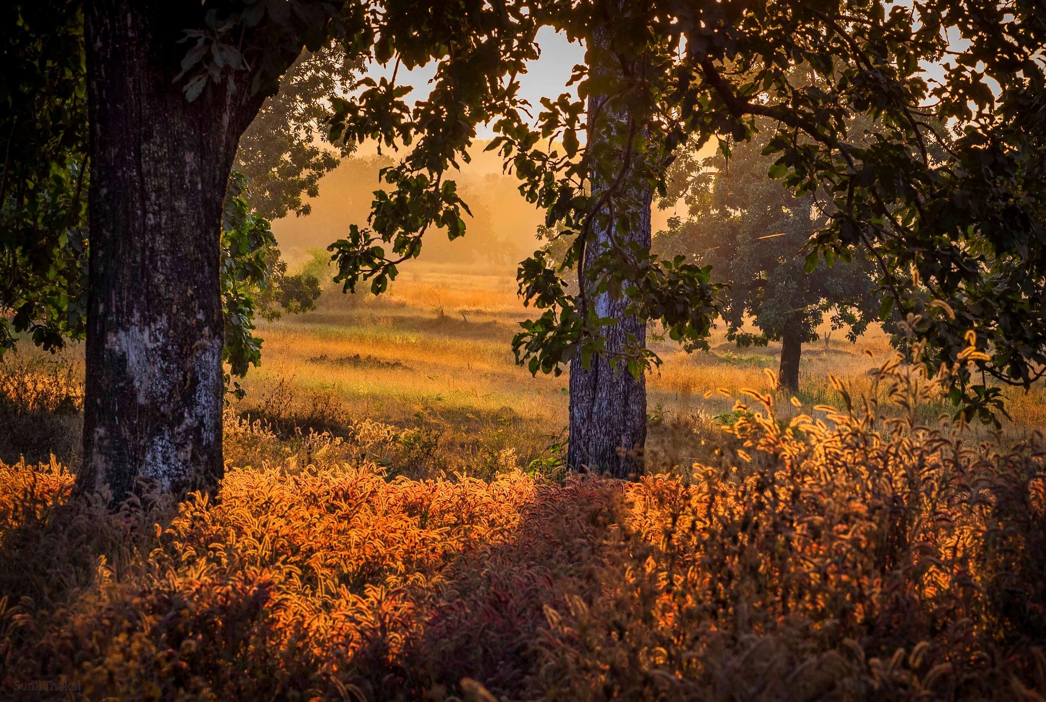 Landscape by Sunil Prabhakar Thokal