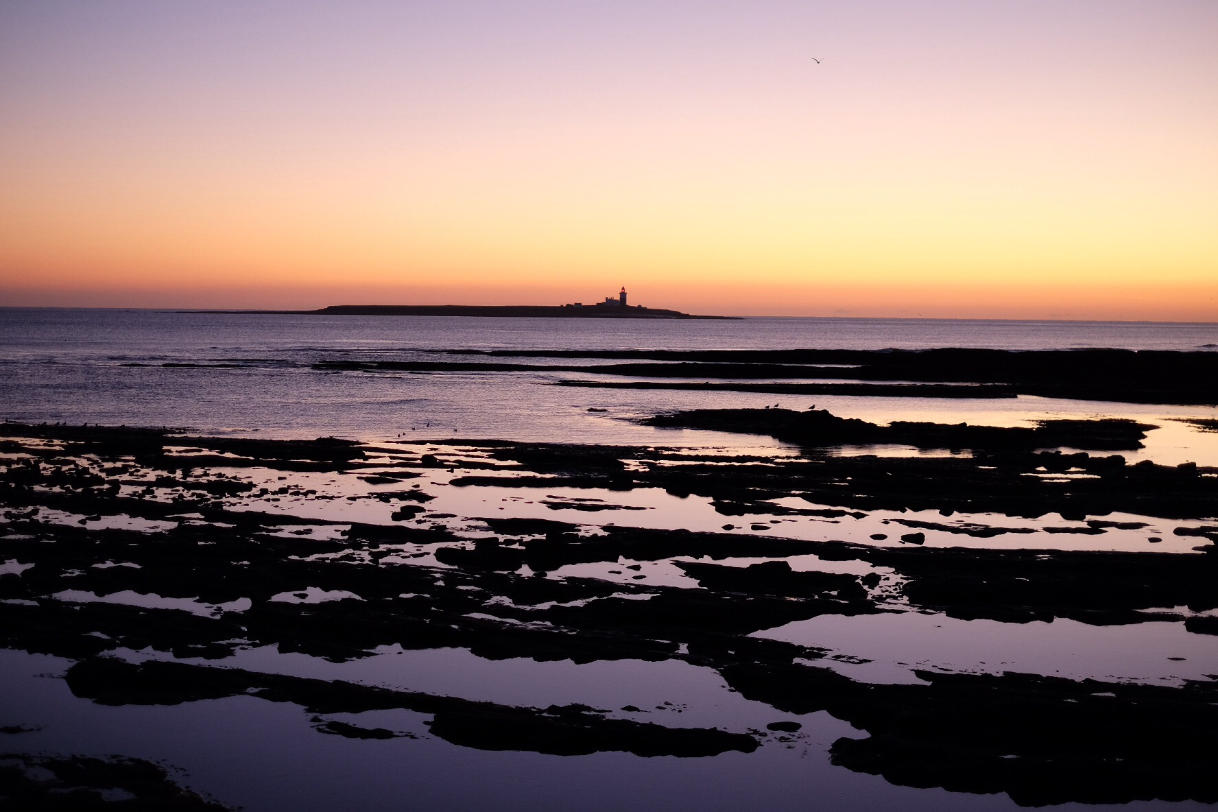 Coquet Island Dawn by Dave Atherton