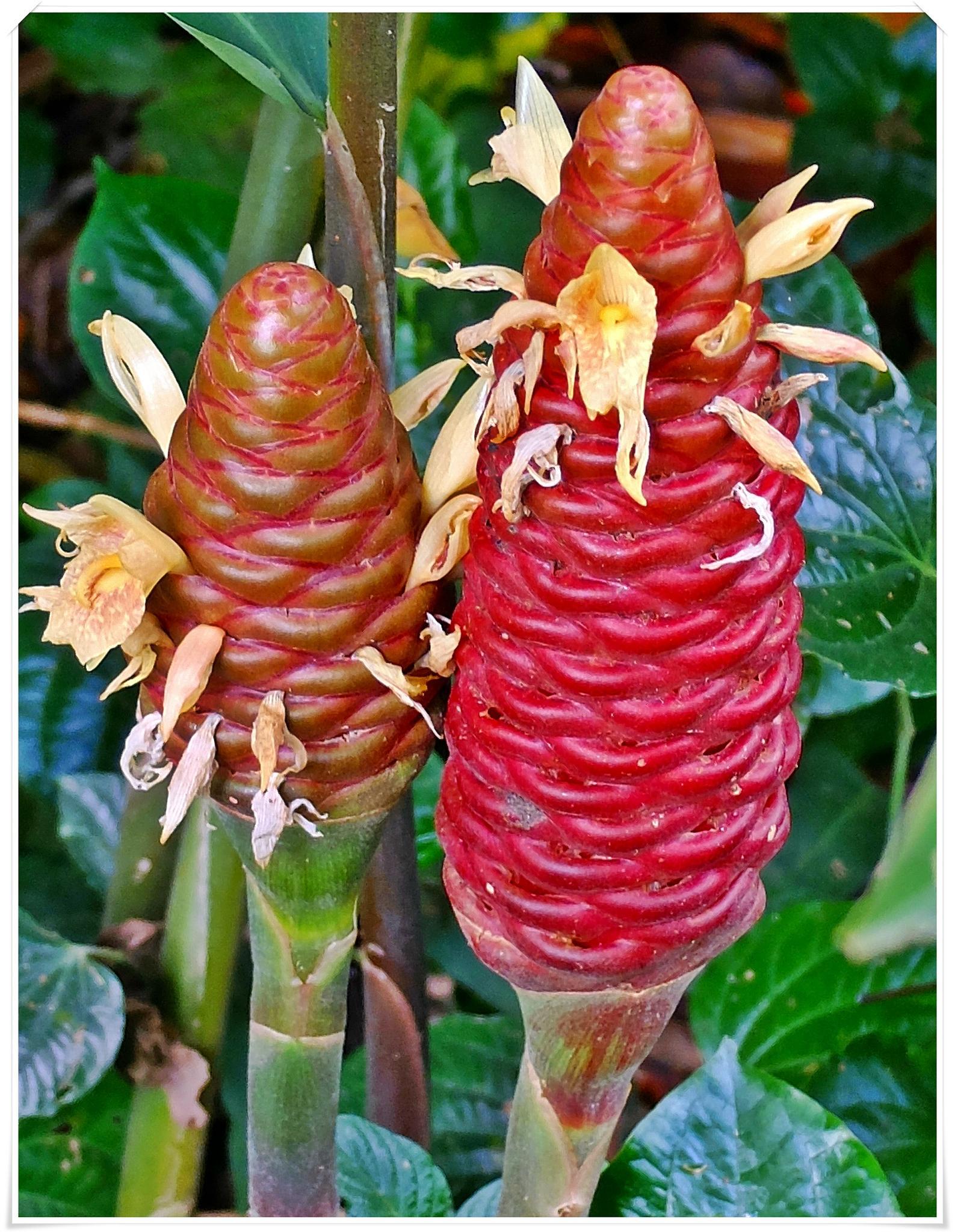 2 flowers  by fragranceumlee