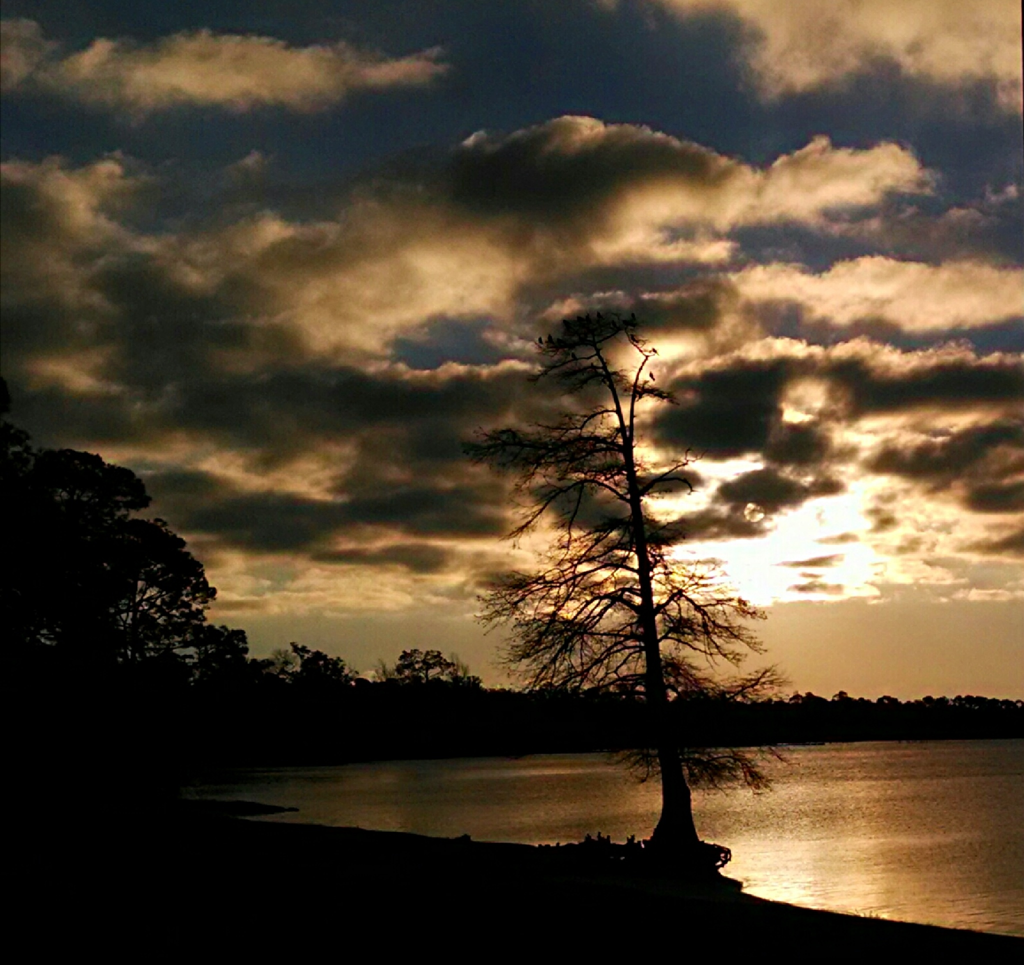 Florida sunrise  by Angela Roark aka Raven Isaboe Wolfe