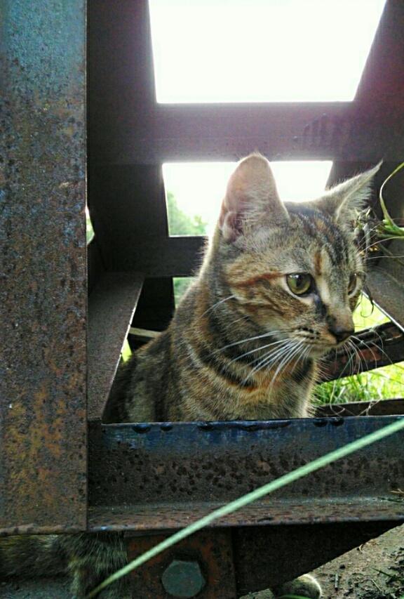 kitty on the farm by Angela Roark aka Raven Isaboe Wolfe