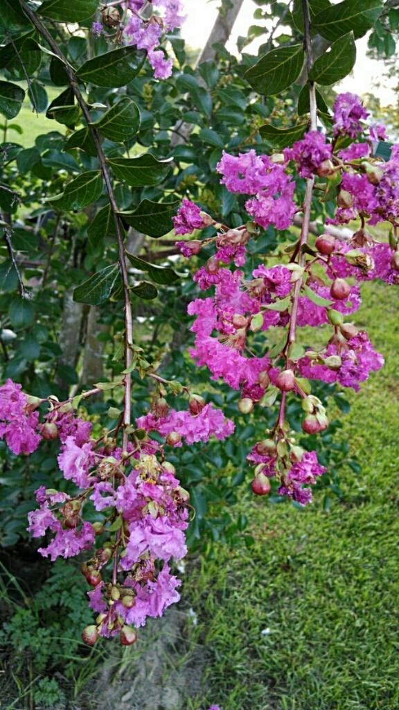 flowers  by Angela Roark aka Raven Isaboe Wolfe