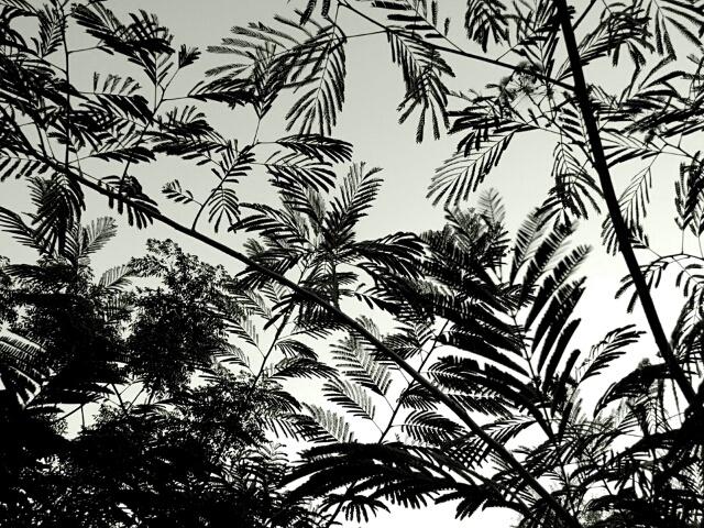 trees by Angela Roark aka Raven Isaboe Wolfe
