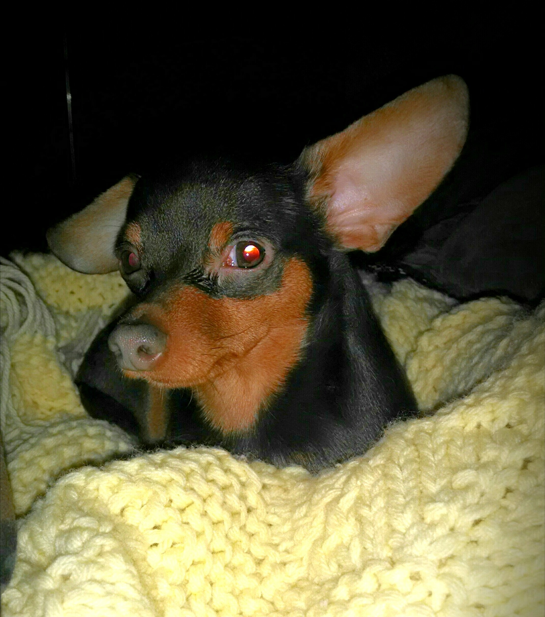 My lil dog by Angela Roark aka Raven Isaboe Wolfe