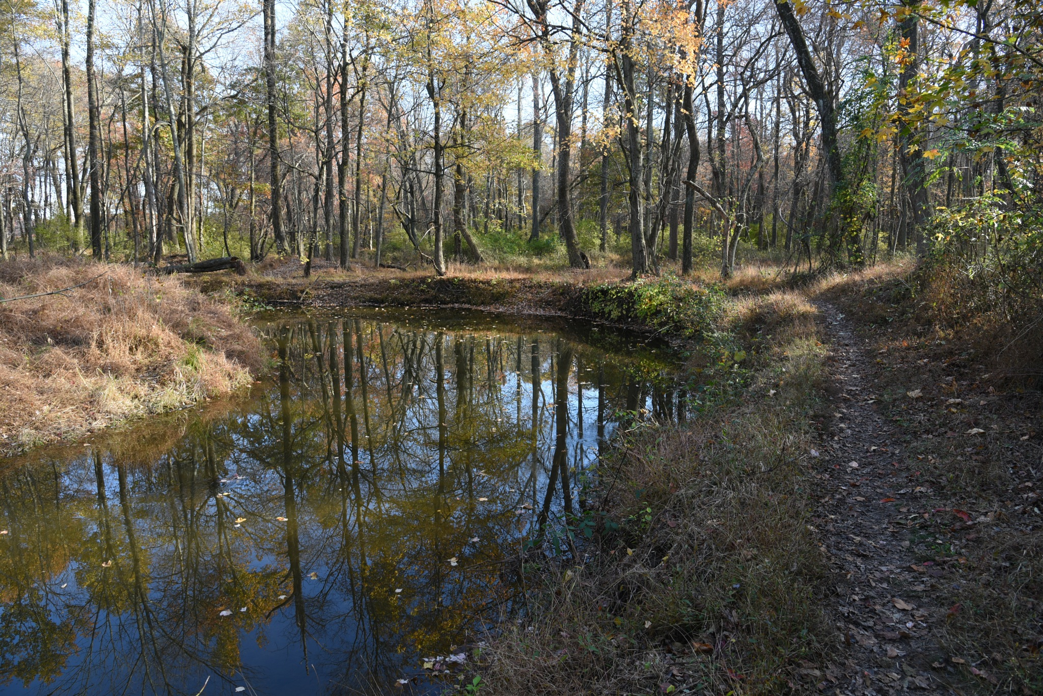Van Nest Wildlife Refuge - A curve in the stream with trees reflected in the water by Vizzpat