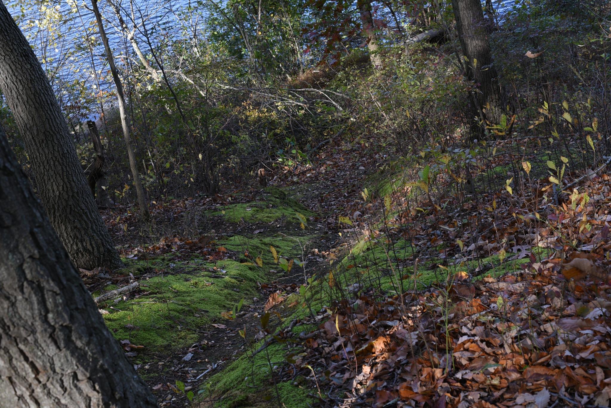 Photography Class - Treacherous Path to the Lakeside by Vizzpat