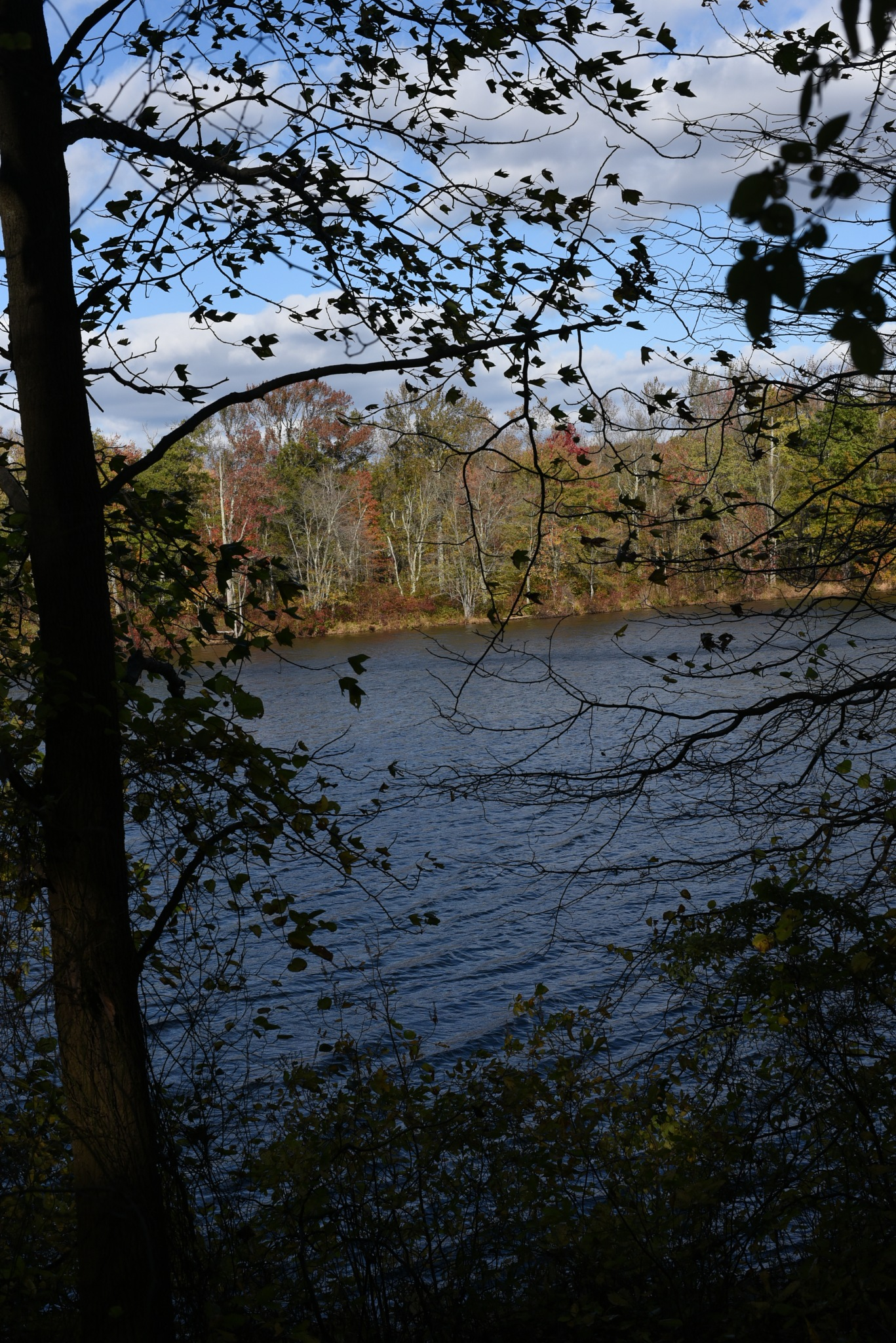 Photography Class - Lake Mercer through the Trees by Vizzpat