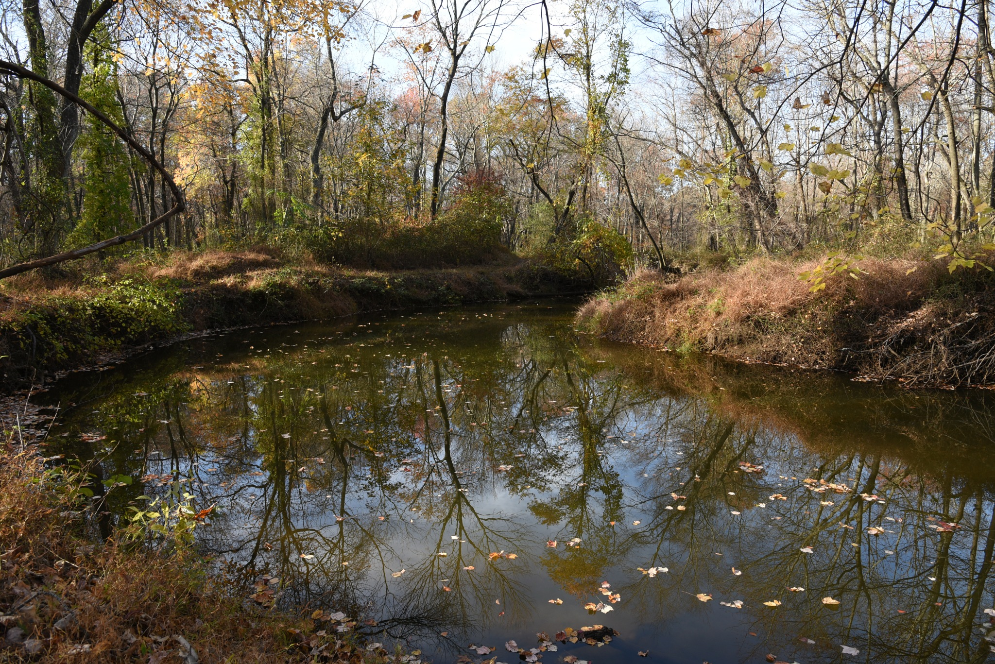 Van Nest Wildlife Refuge - Stream dappled with the fallen leaves of trees by Vizzpat