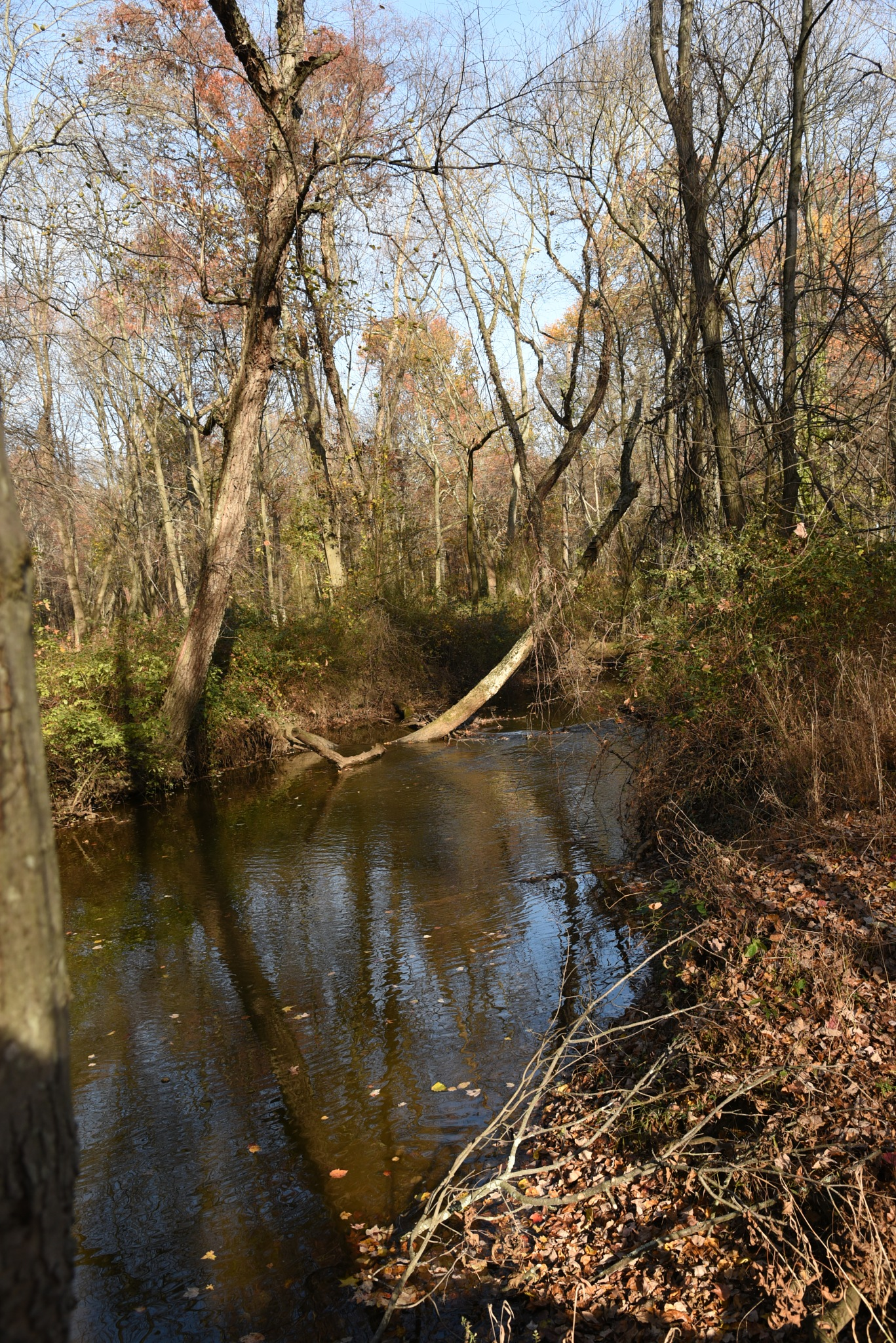 Van Nest Wildlife Refuge - Stream in refuge with bare trees on the banks by Vizzpat
