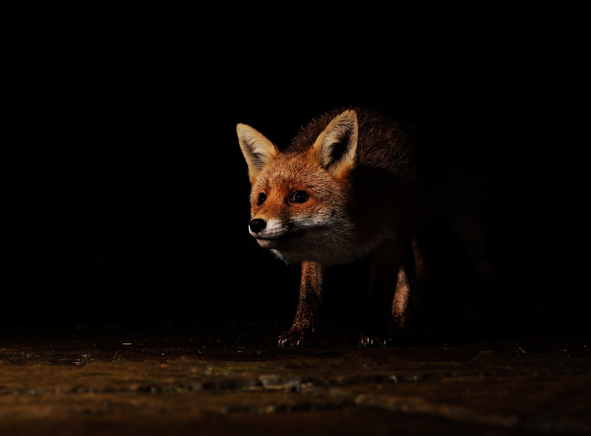 Night Prowler by Paul Collins