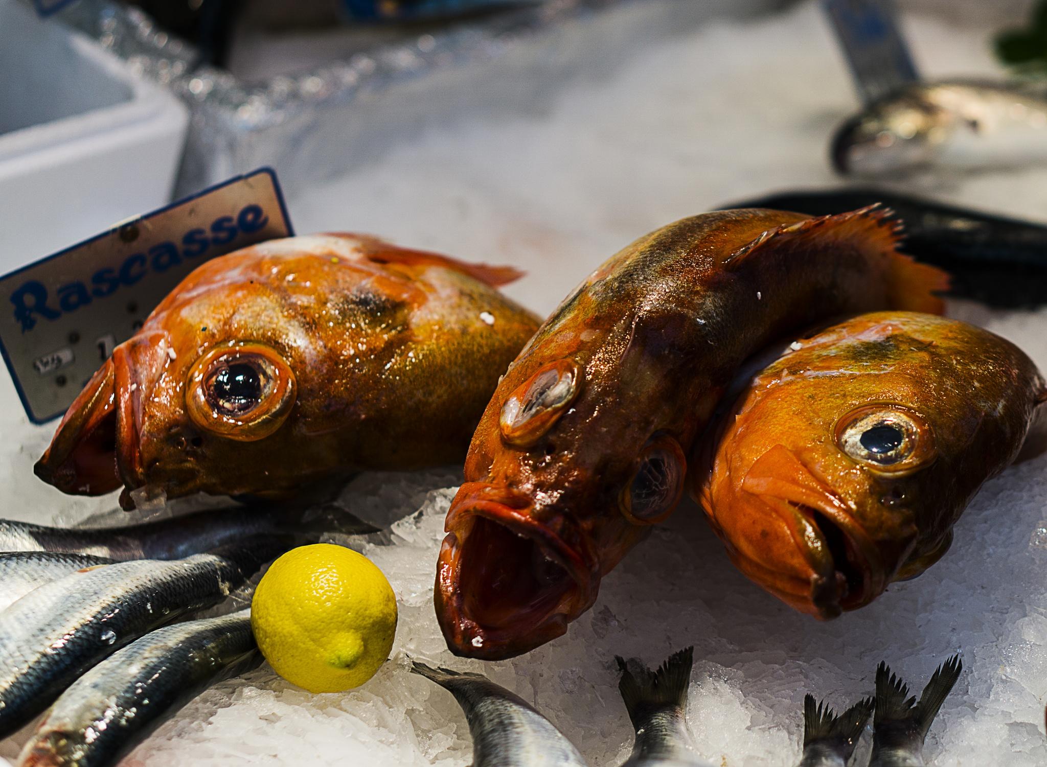 Something Fishy, Paris by Chris Lane