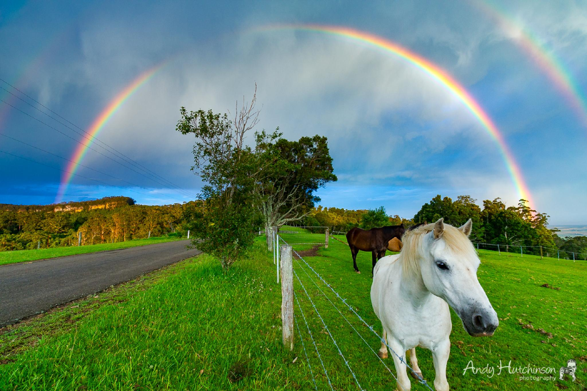 Pony and the Rainbow by Andy Hutchinson