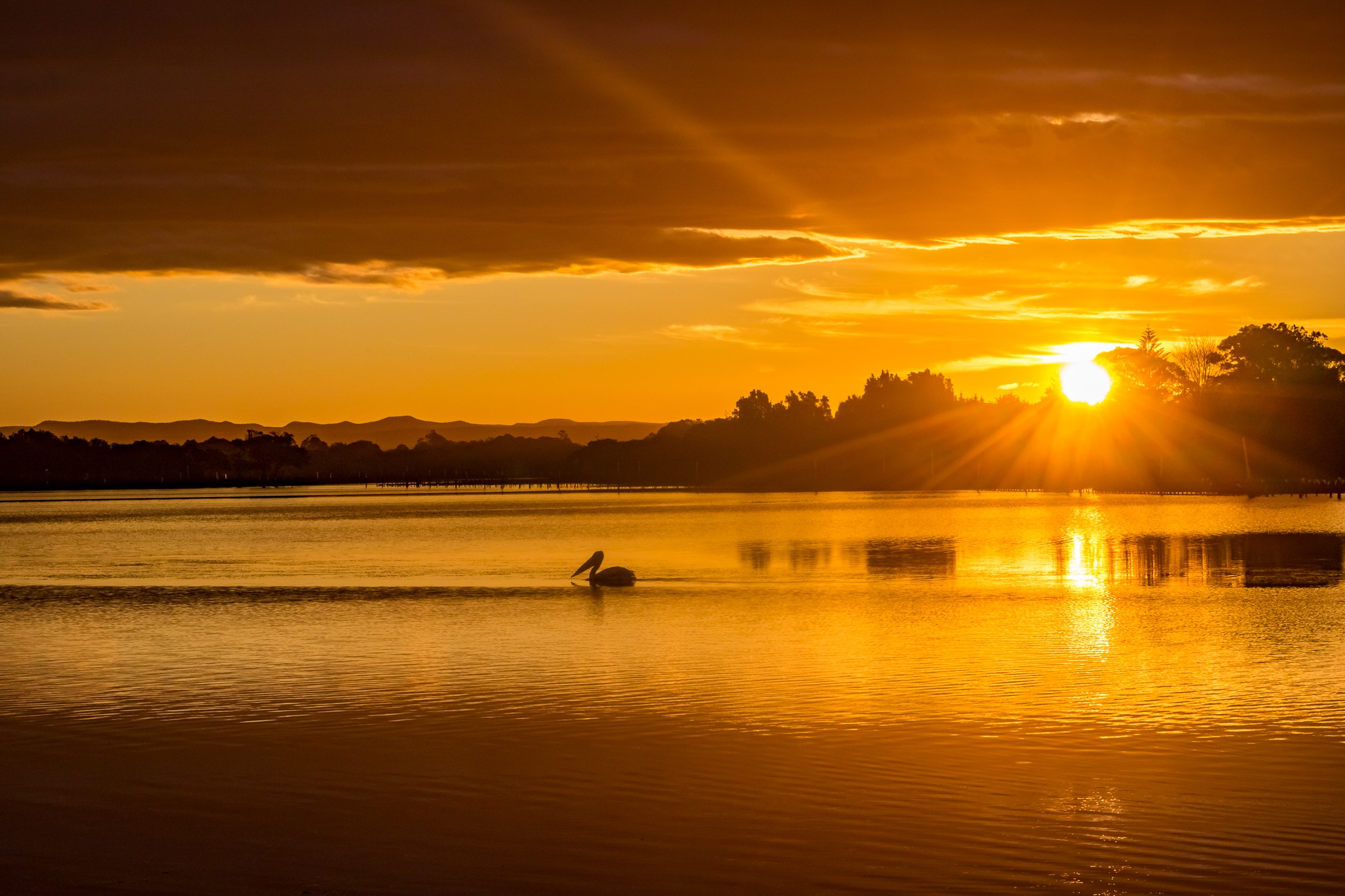 Pelican on the Shoalhaven by Andy Hutchinson