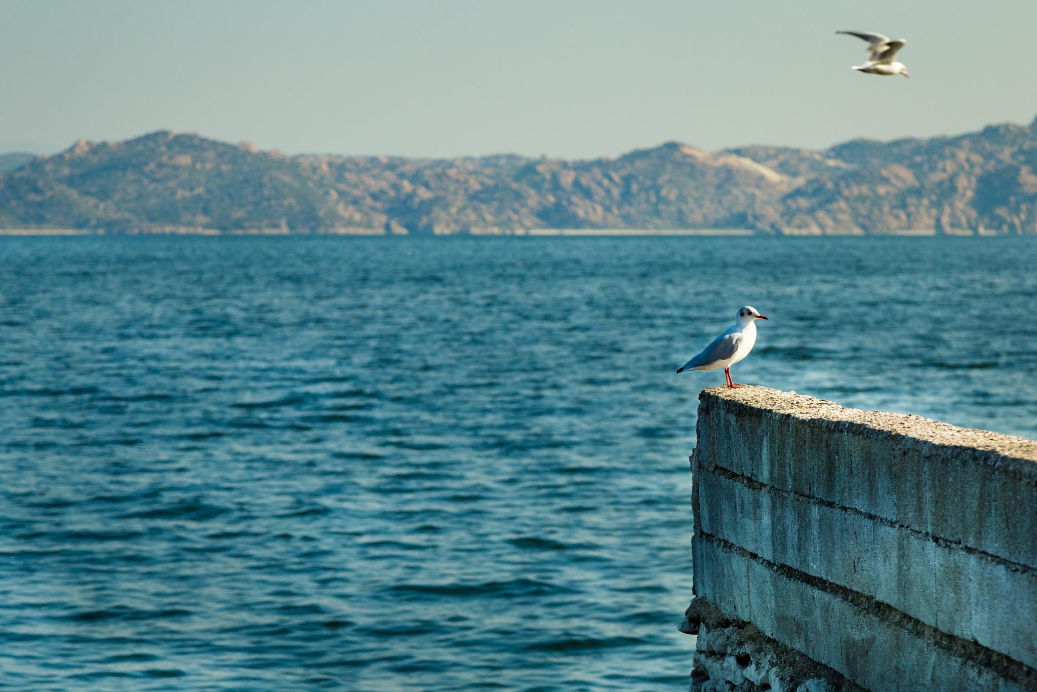 Birds by the sea by AdrianPerekPL