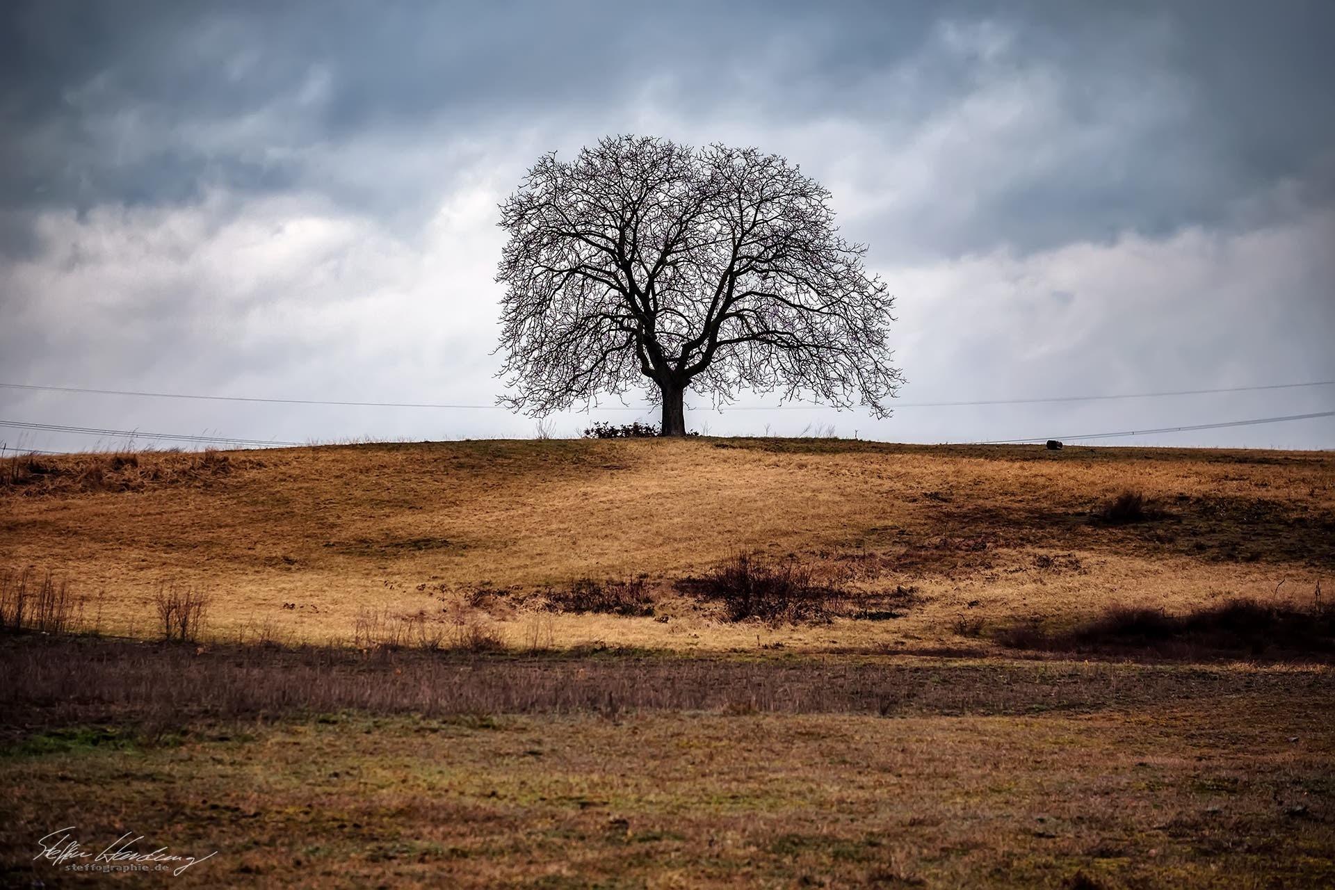 desert tree  by steffographie