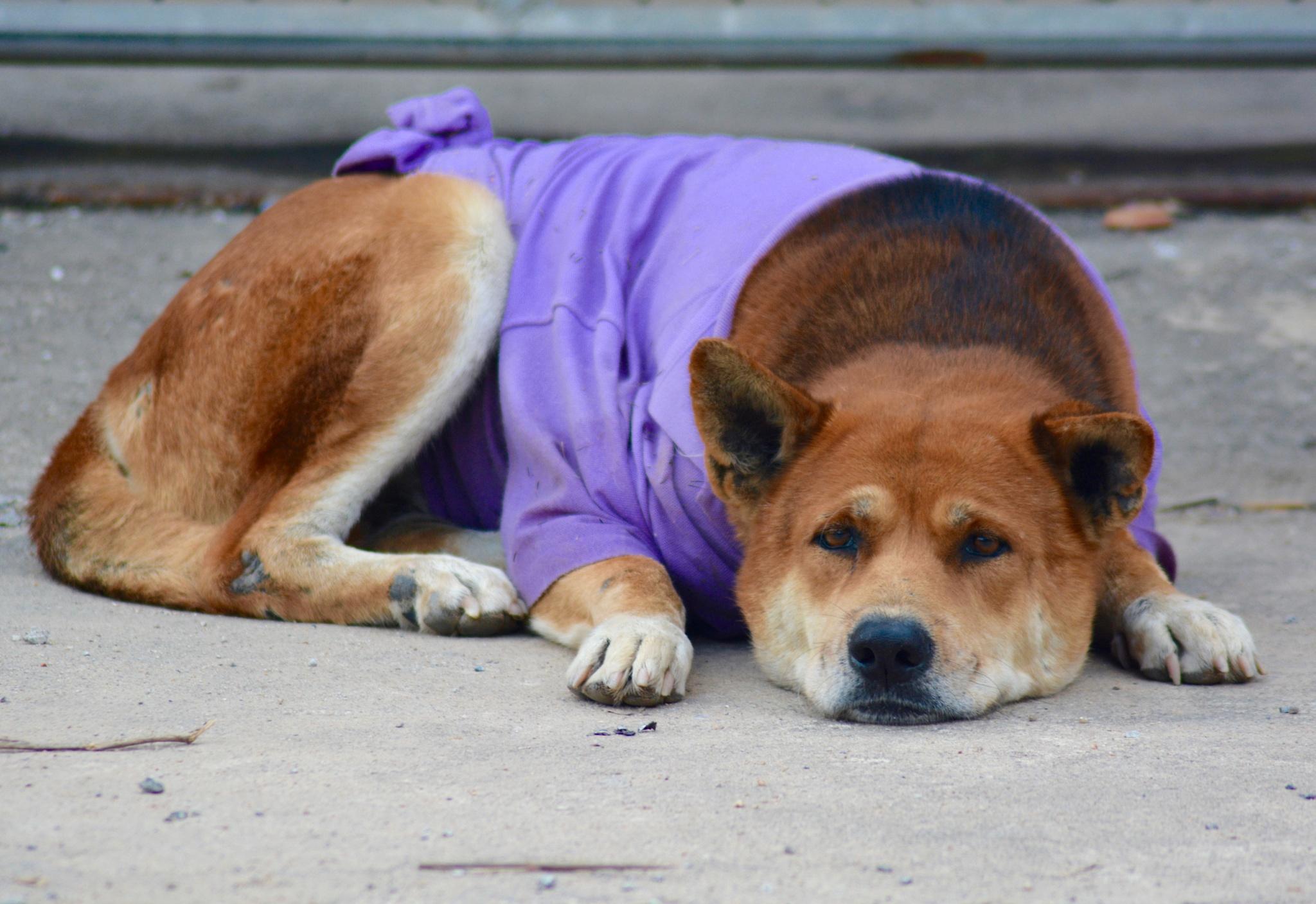 Street Dog by Frank Brande