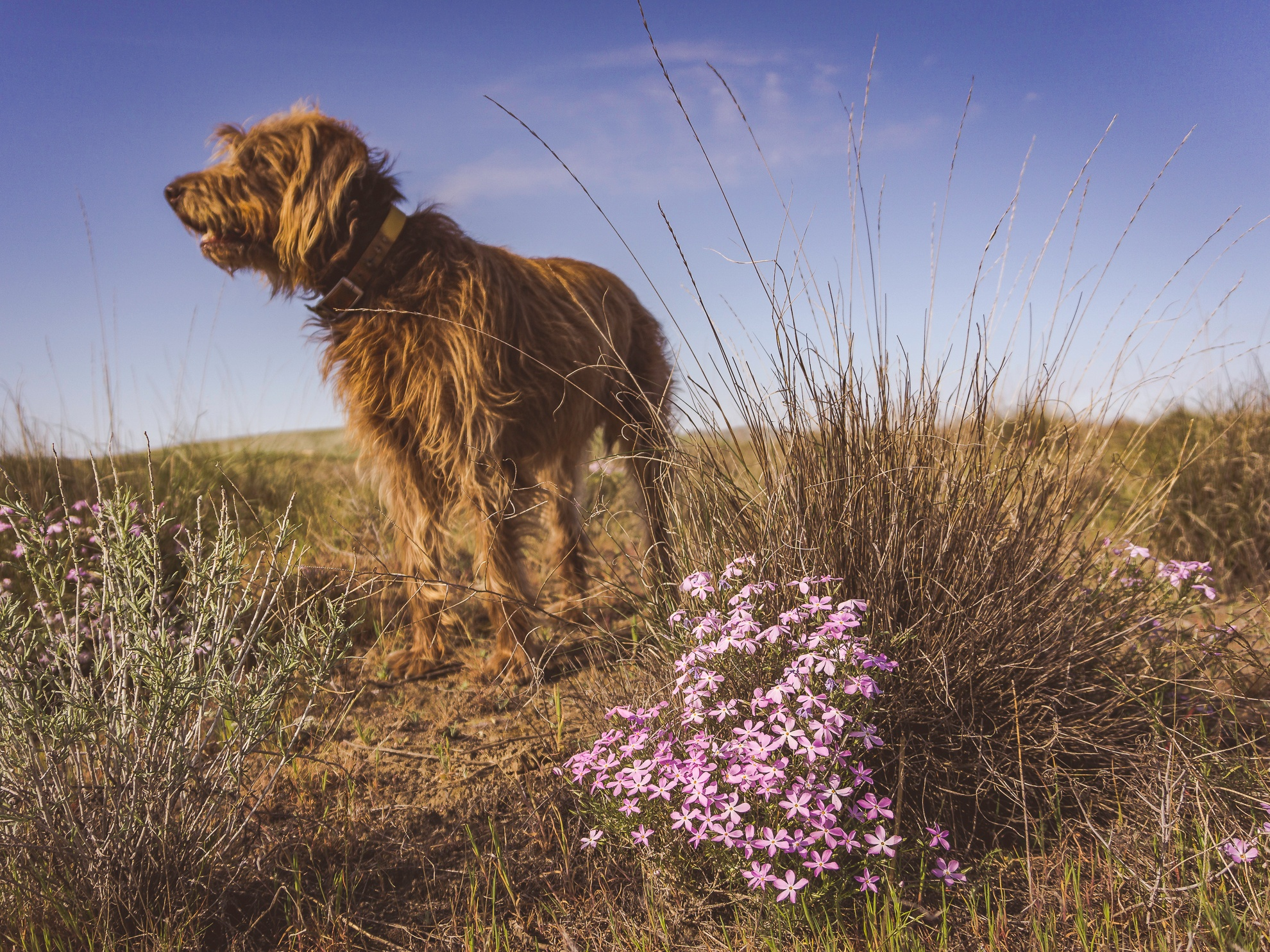 Gracie Admiring the Wildflowers by EarlH