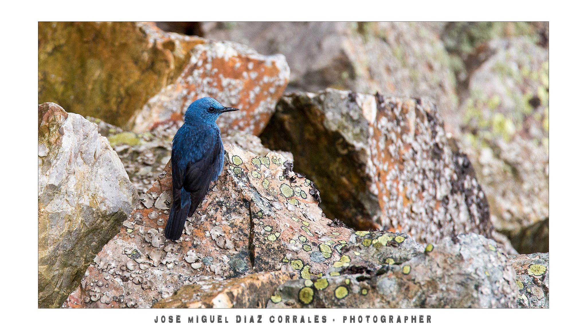 Photo in Animal #monfrague #aves #birds #roquero
