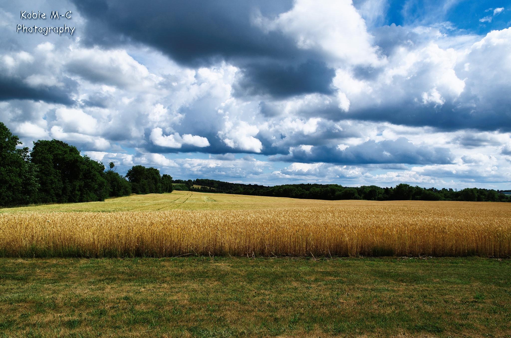The Harvest by Kobie Mercury-Clarke