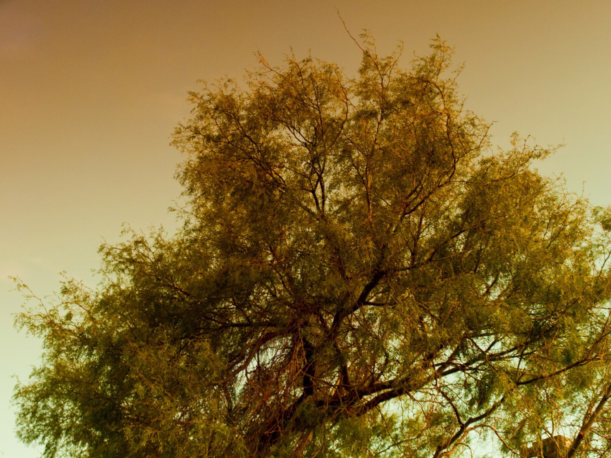 The Tree by Robert Brown