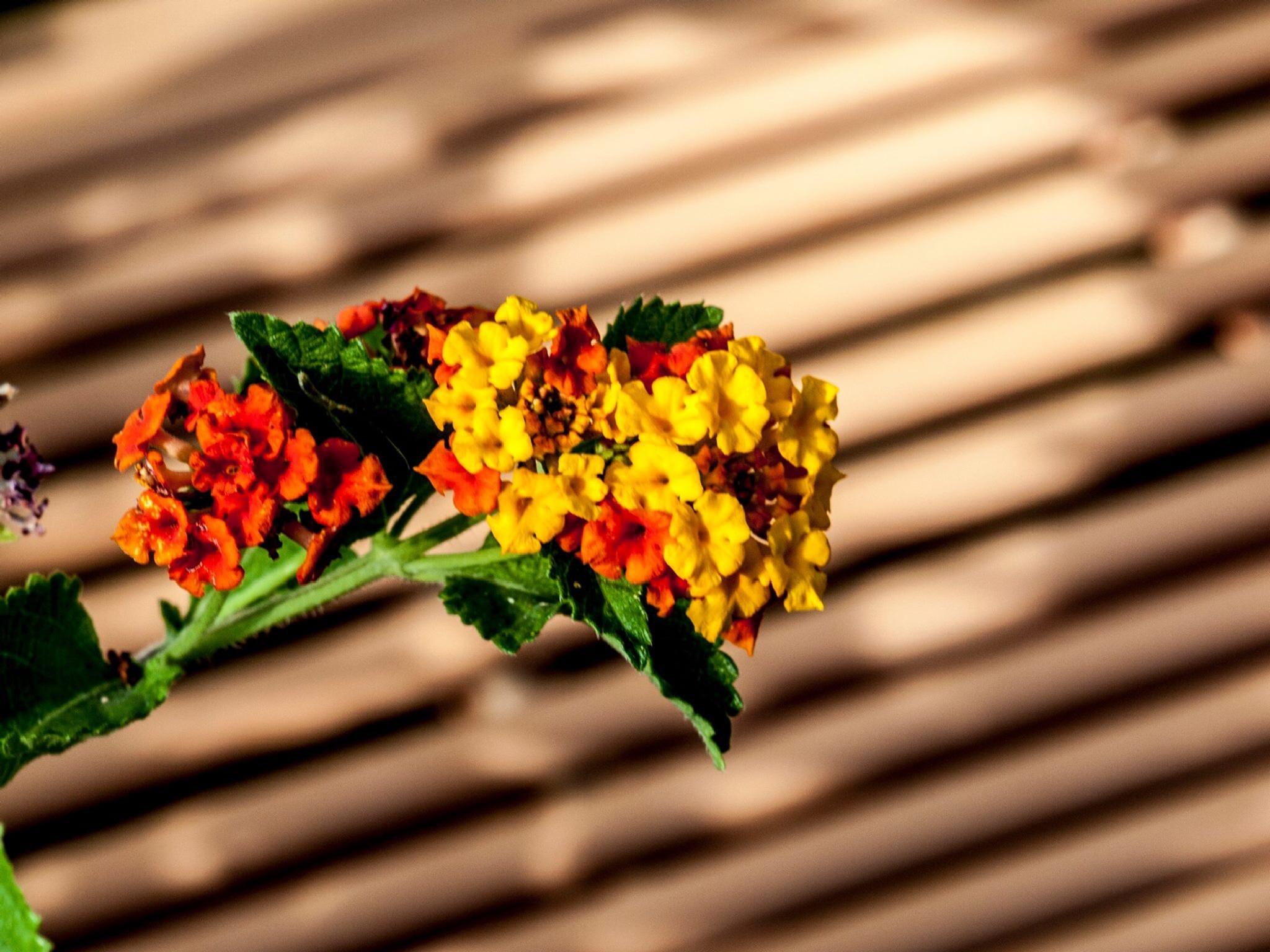 Flowers by Robert Brown