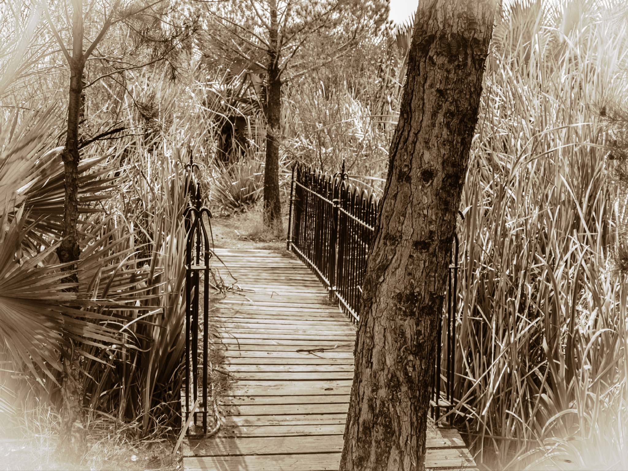 Sepia Bridge by Robert Brown