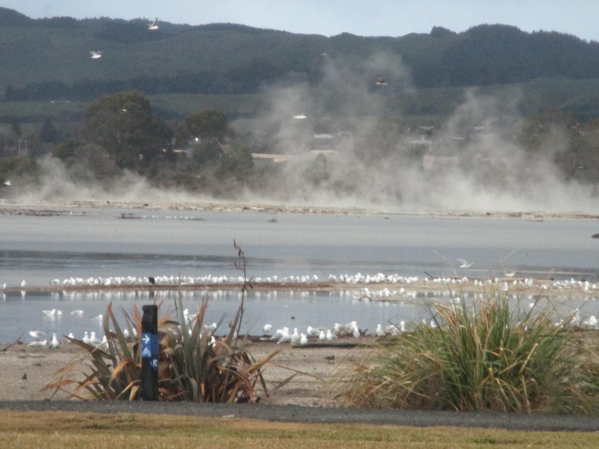 Lake Rotorua by Michele  Stewart