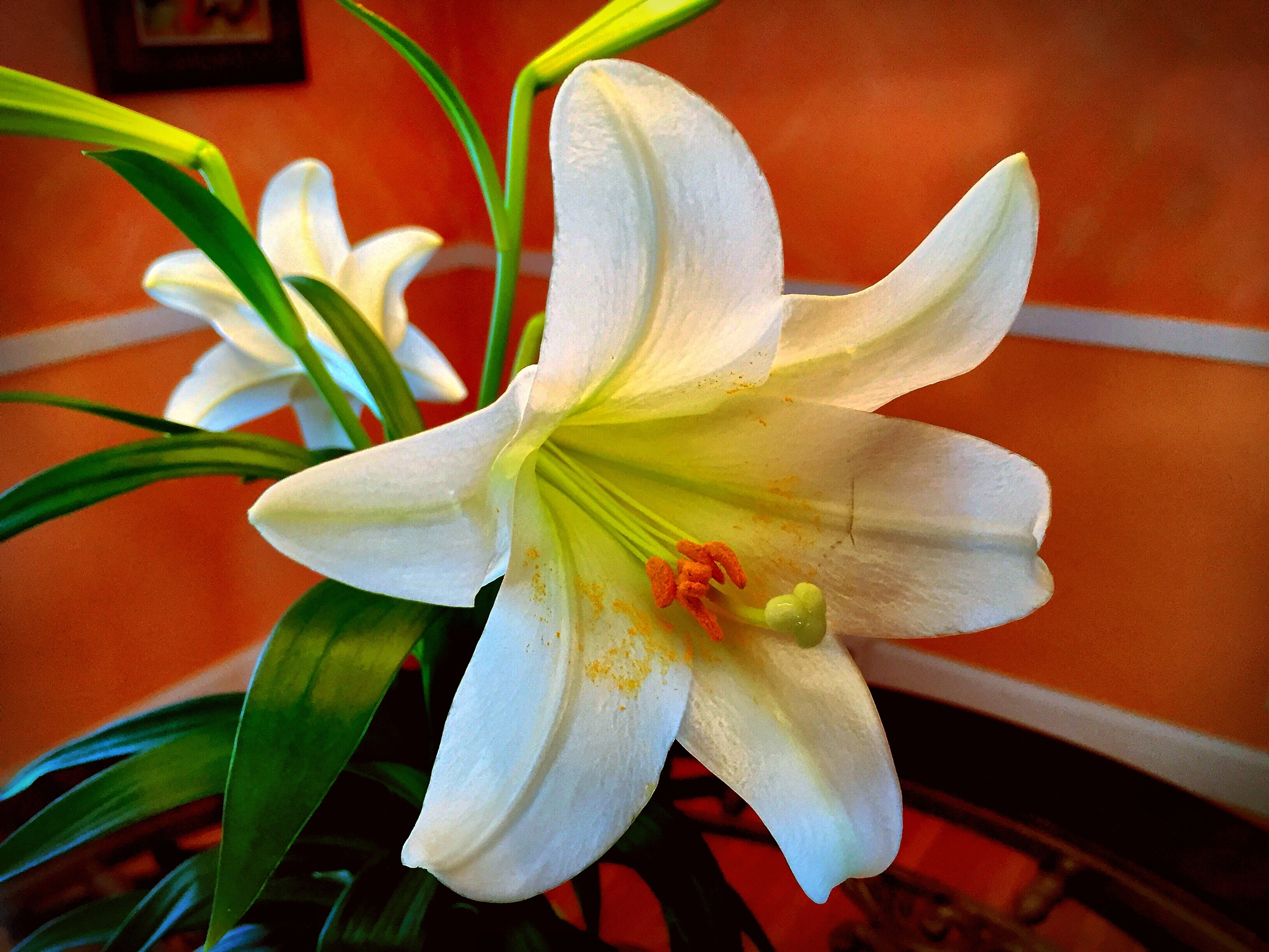 Easter Lily! by Jose Luis Acevedo