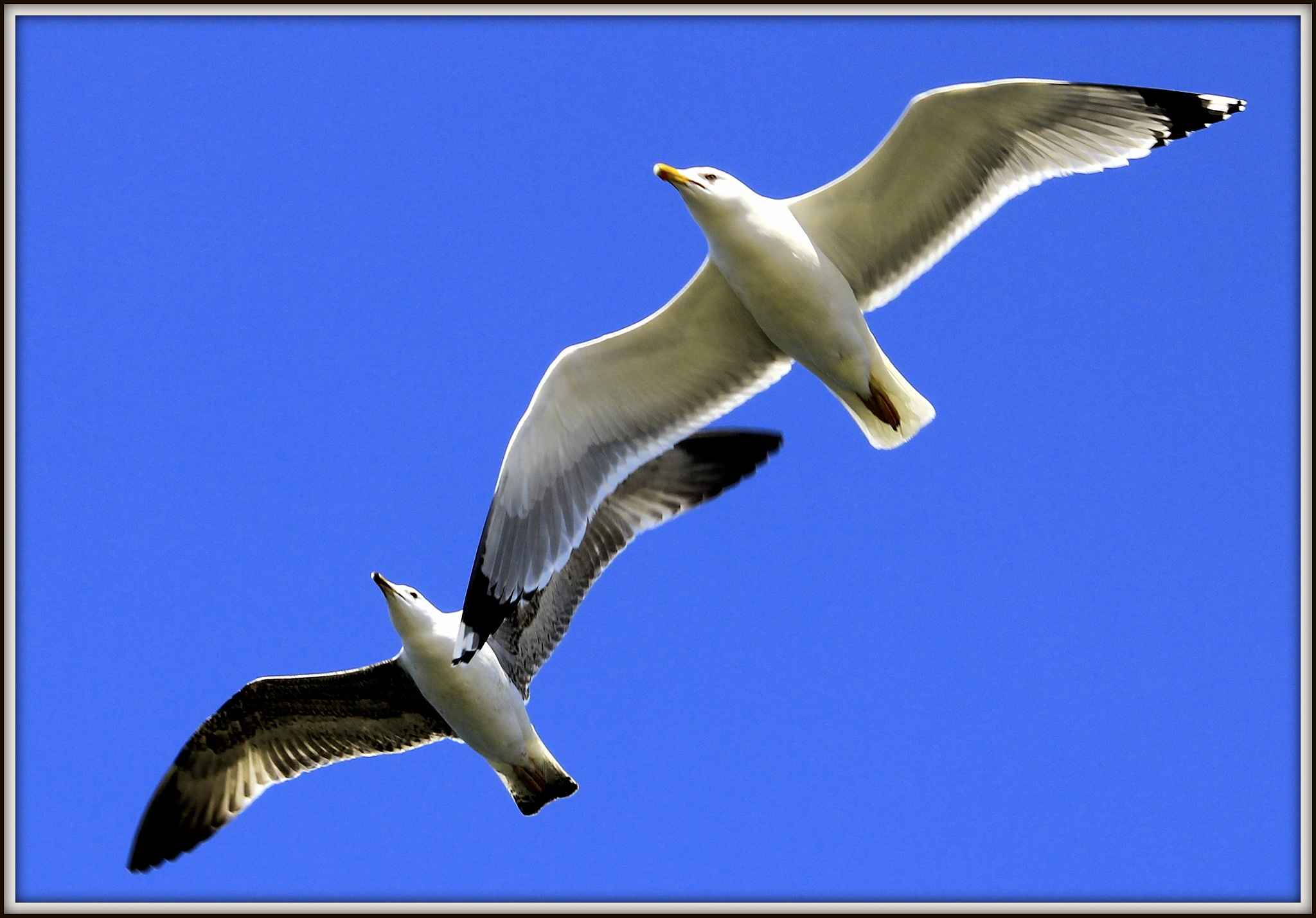 seagull by Erdoğan ORÇİN