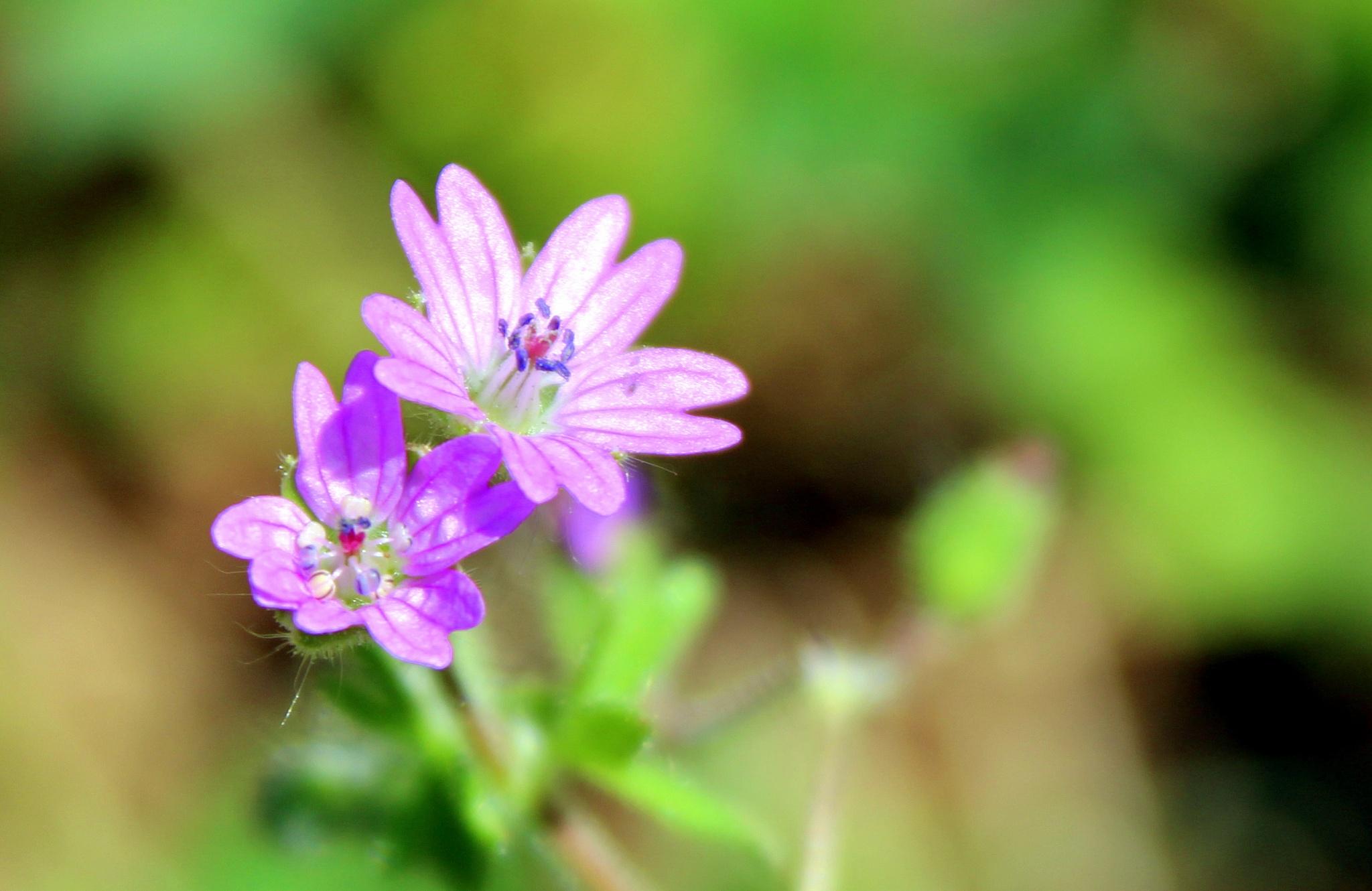 flower by Erdoğan ORÇİN