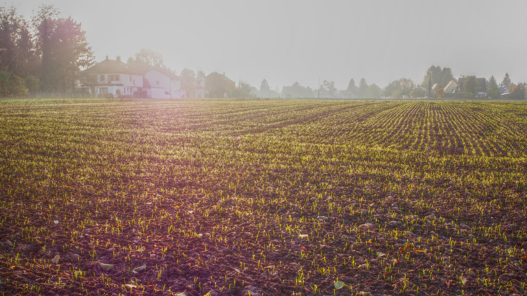 crop field by tancon
