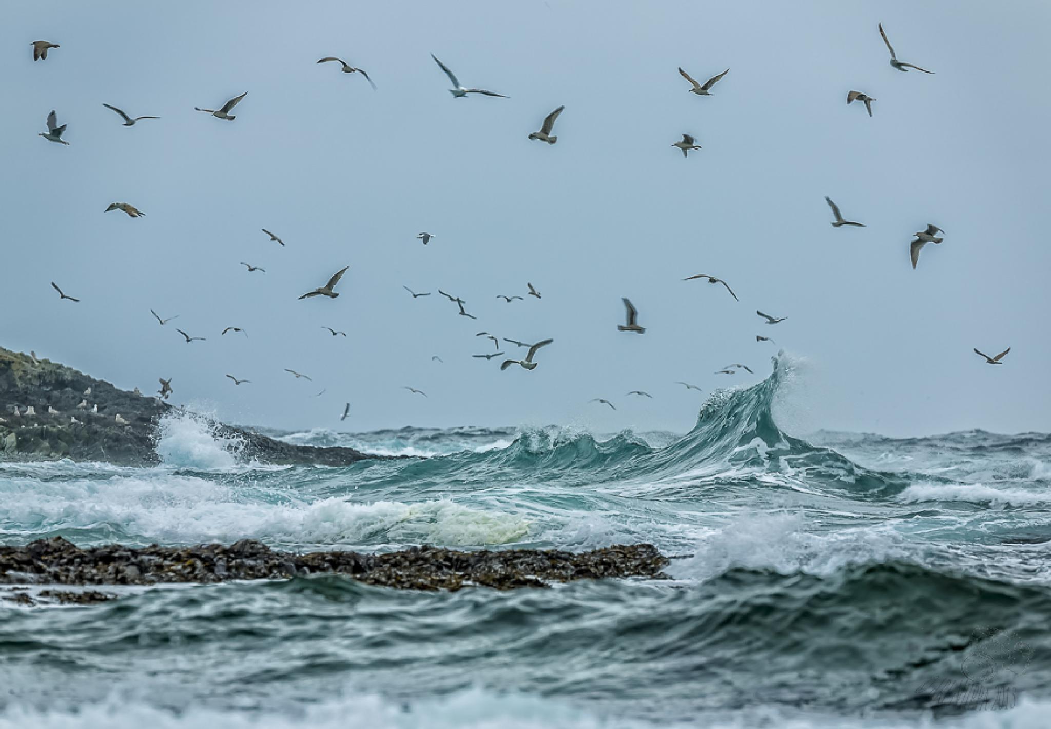 Arctic sea  by Ari Niippa