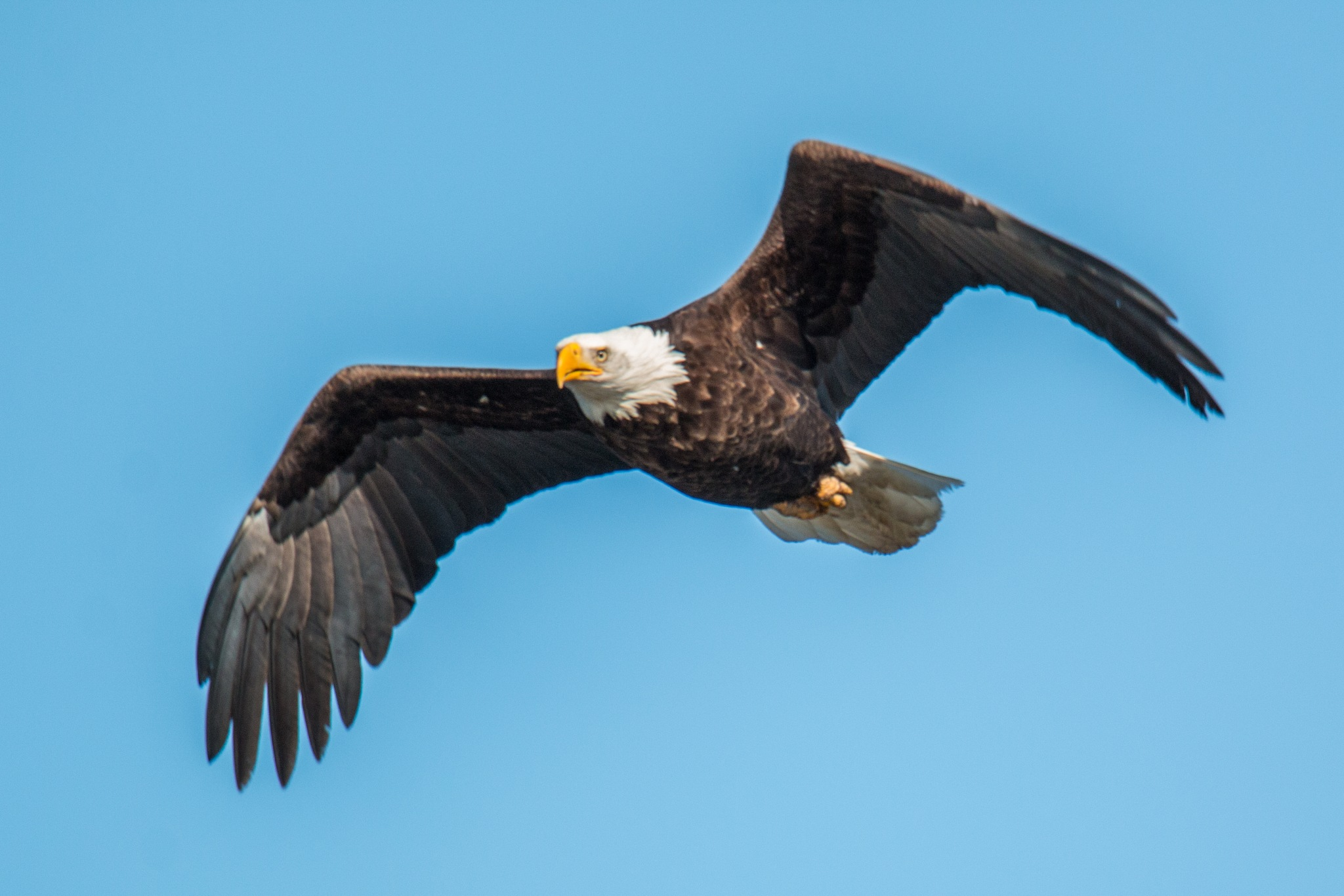 Eagle by Werner R. Ennesser