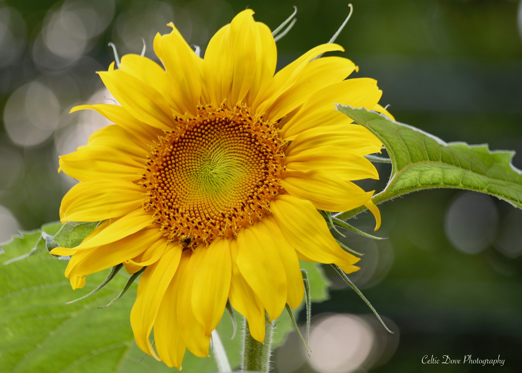 Sunny Side Up by CelticDove