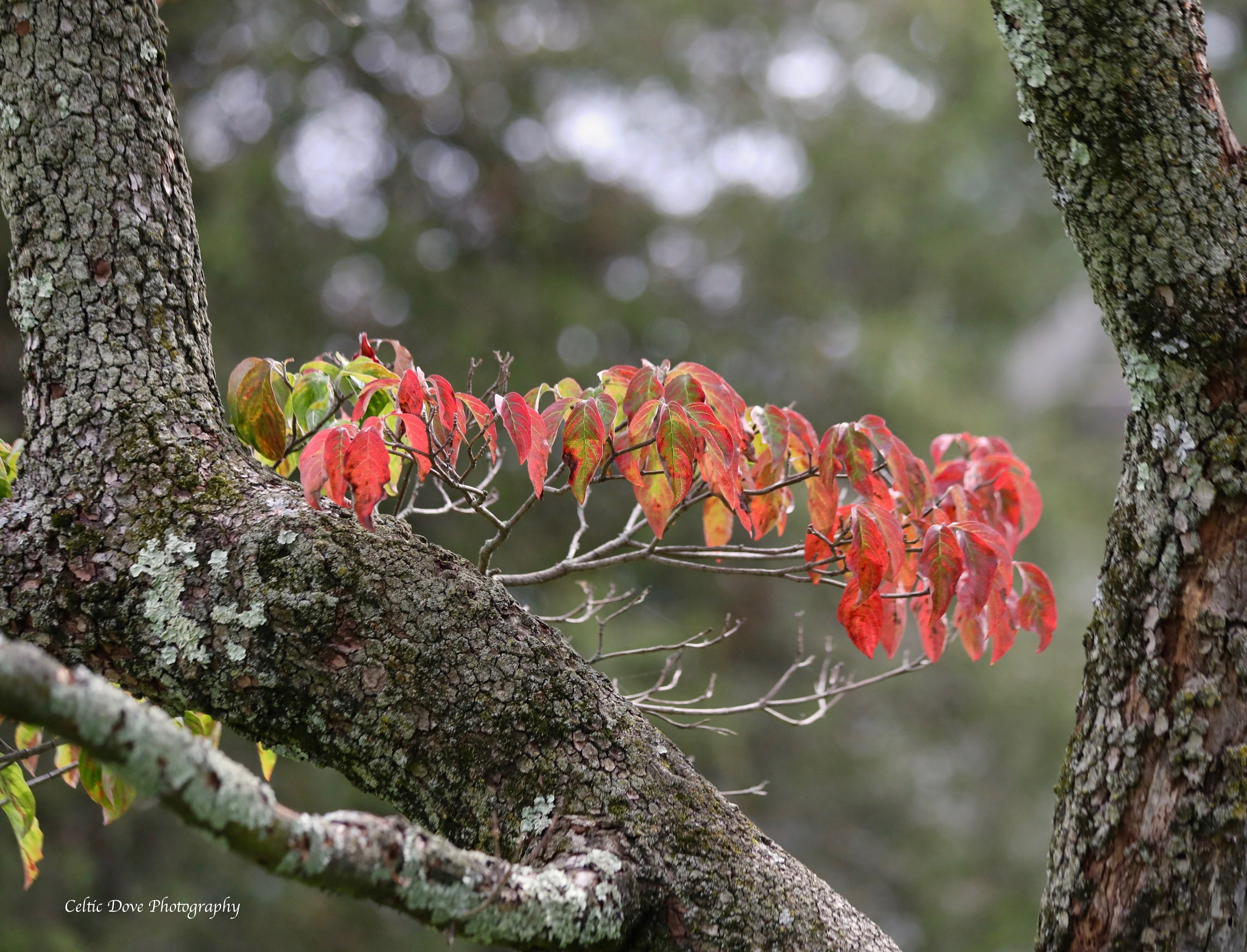 Changing Season by CelticDove