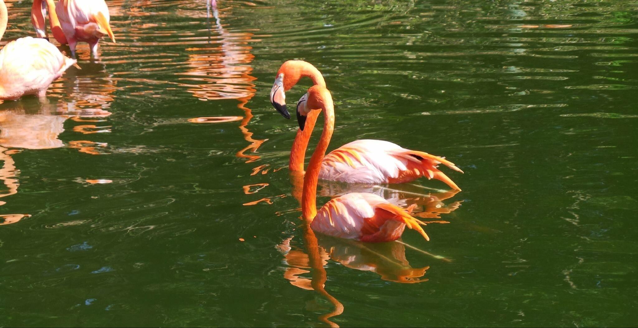 Green and Orange by Shabana